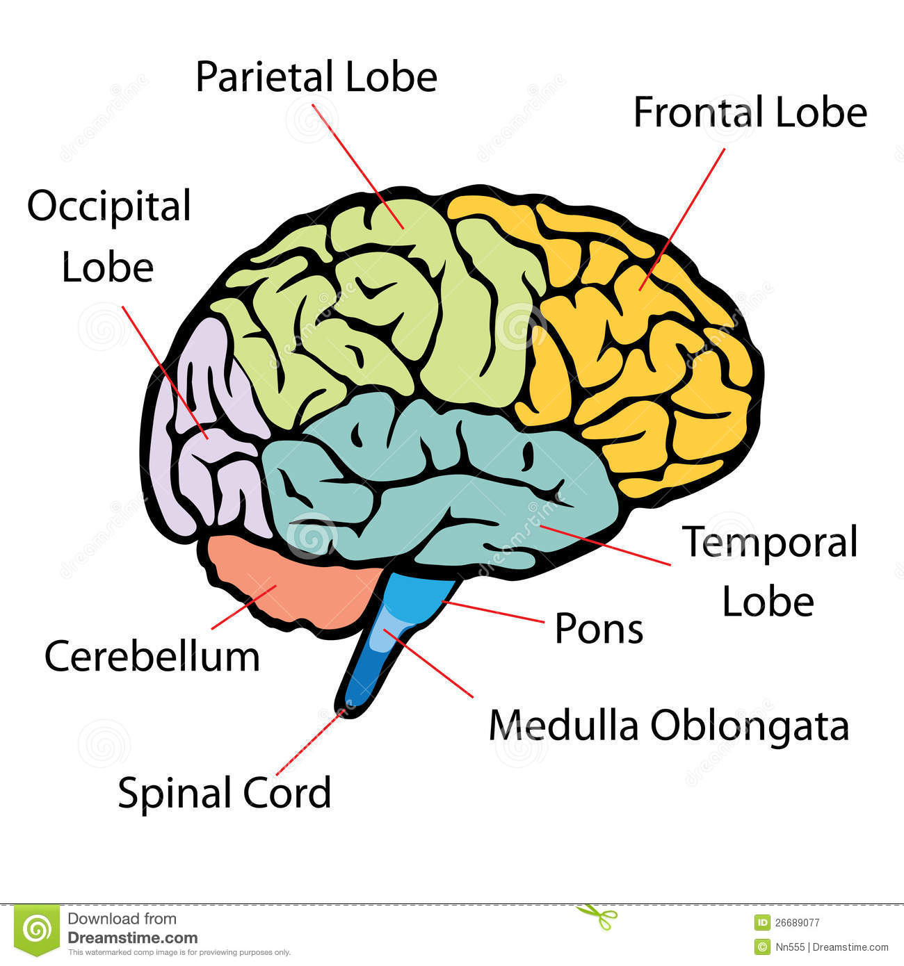 Brain Sections Royalty Free Stock Photos - Image: 35013408