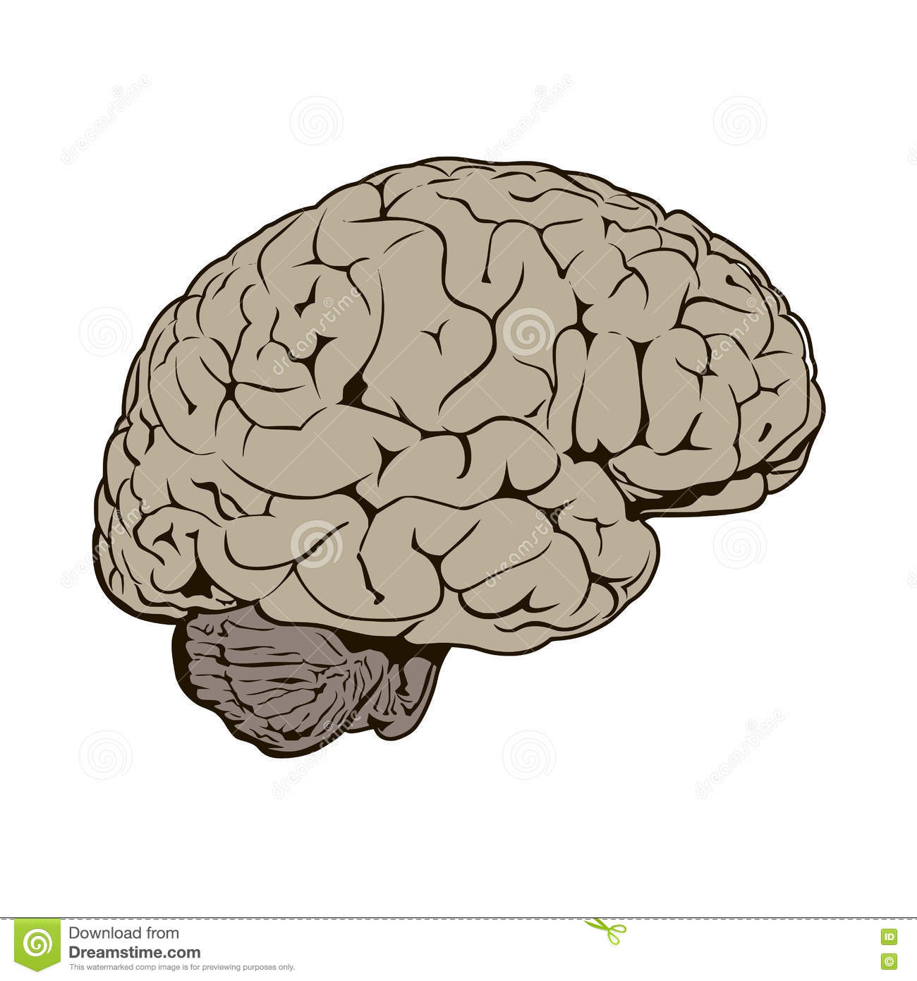 Brain Drawing Side View