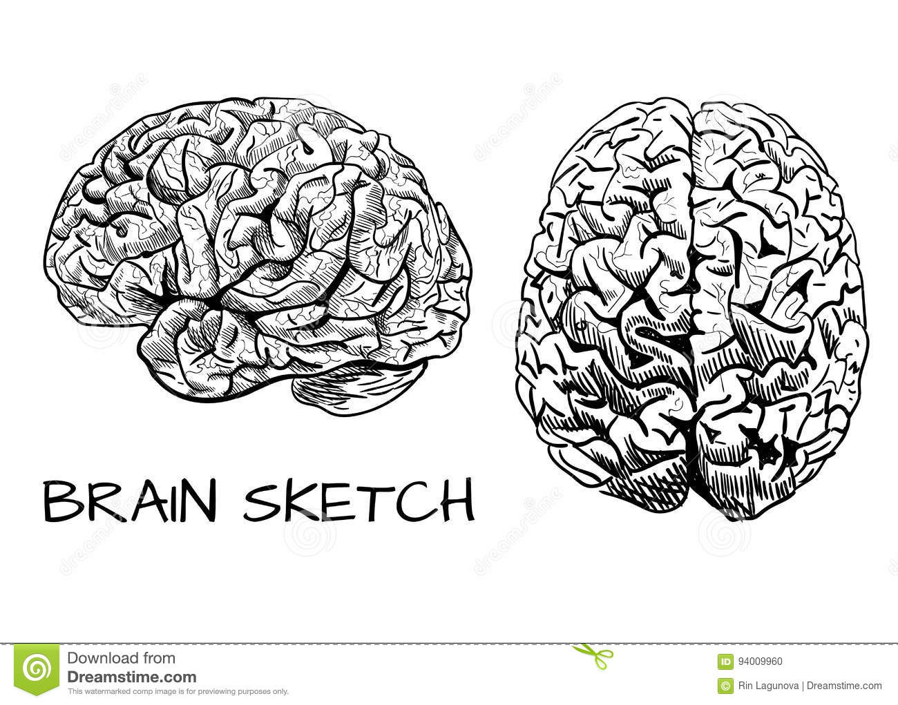 Line Drawing Brain : Brain front view icon vector illustration cartoondealer