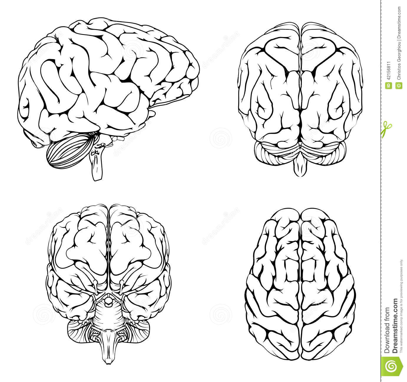 Brain from top side front and back stock vector illustration of download brain from top side front and back stock vector illustration of health brain ccuart Gallery