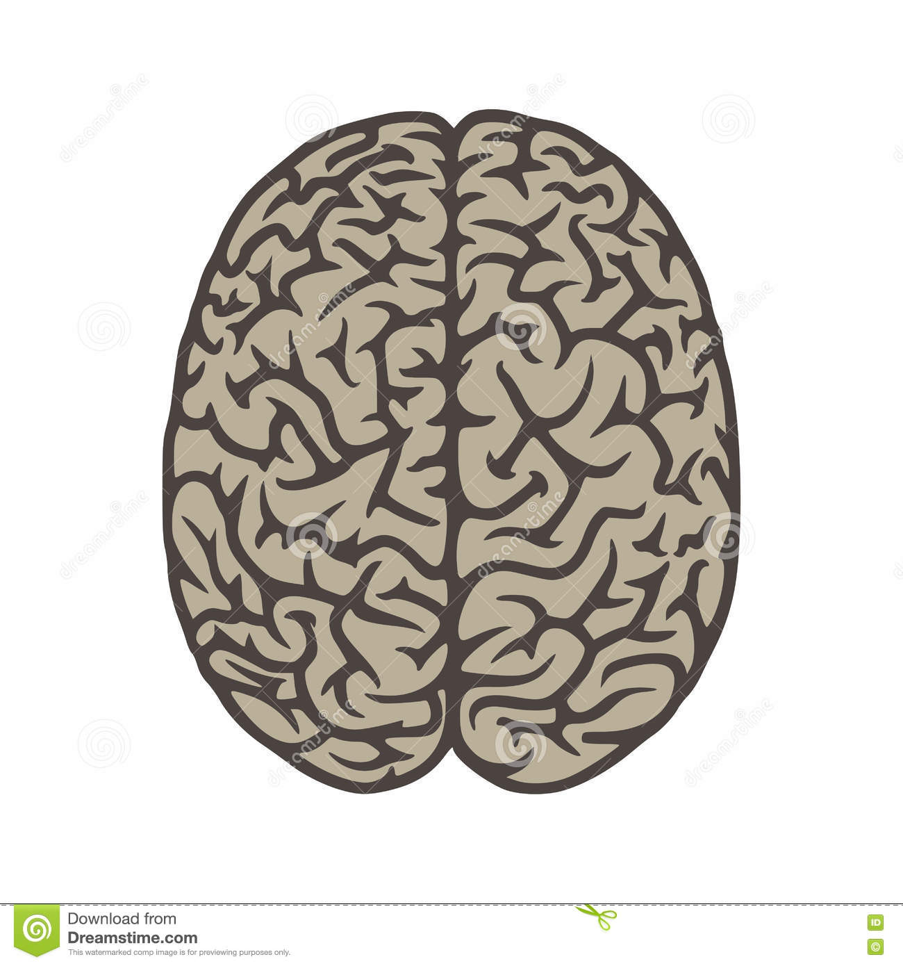 Brain Top View Illustration Object Stock Vector ...