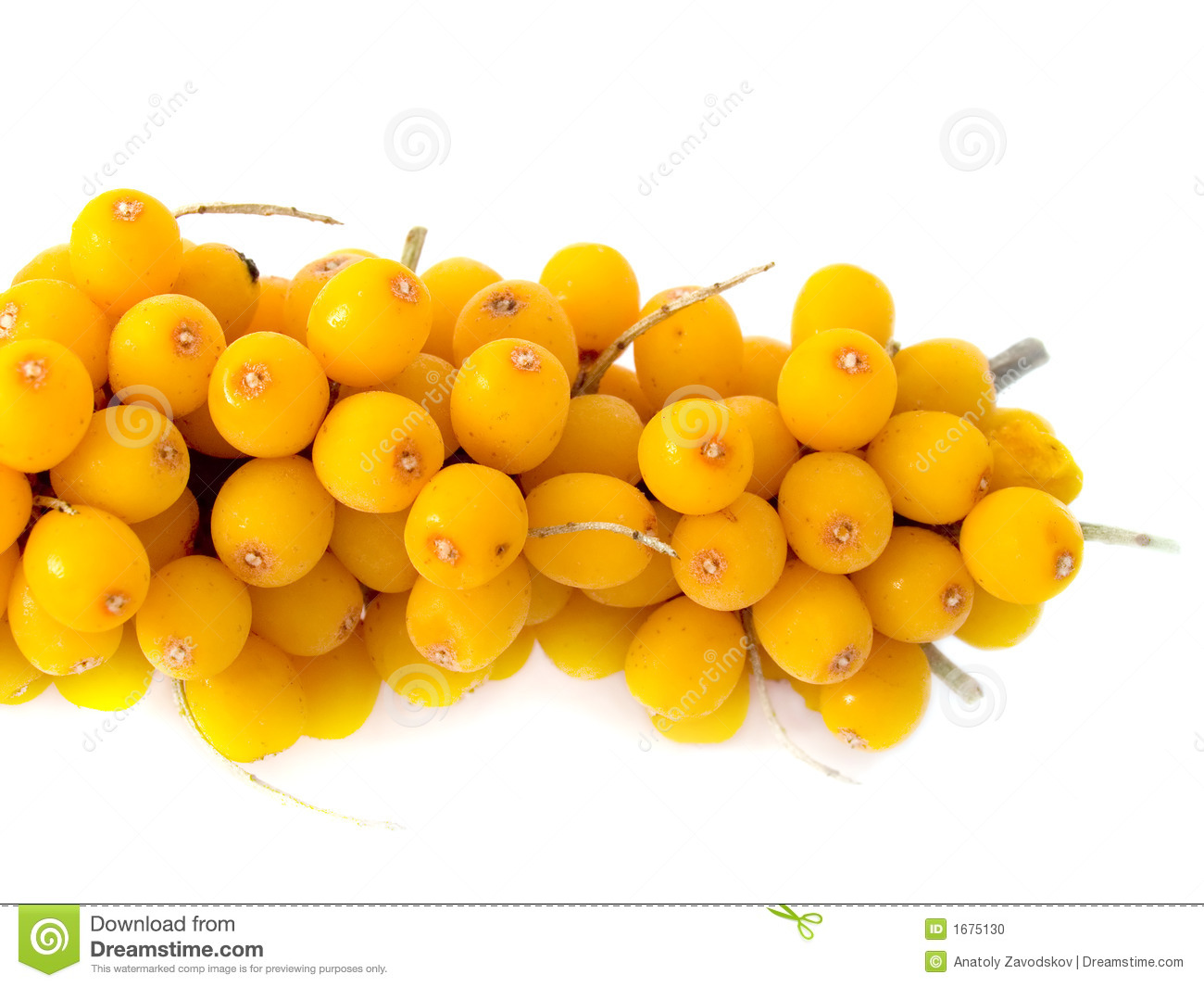 sea buckthorn svenska