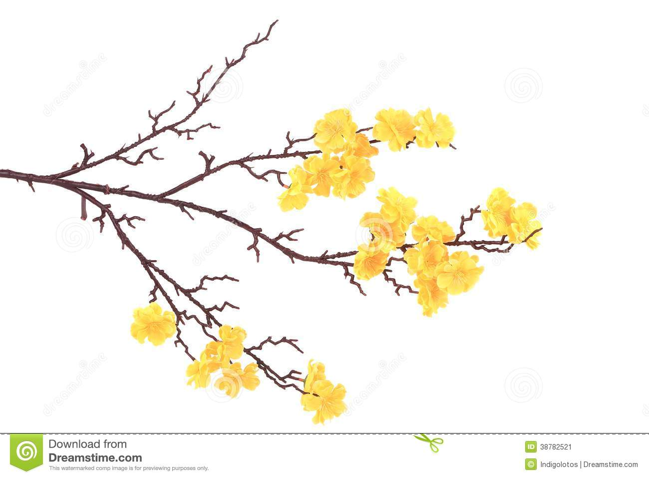 Branch Of Blooming Yellow Flowers Stock Image Image Of