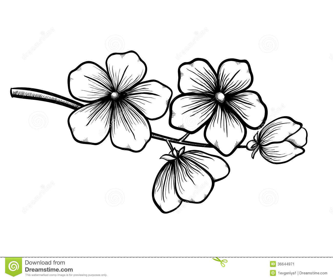 Cherry Blossom Tree Black And White: Branch Of Blossoming Tree In Graphic Black White S Stock