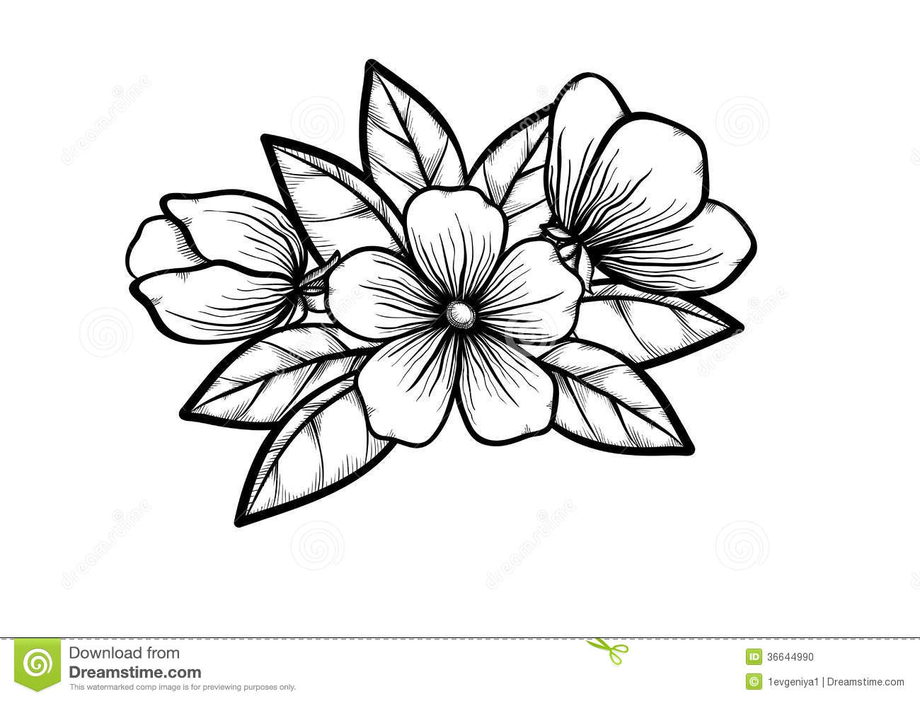 branch of blossoming tree in graphic black white s stock photo image 36644990 cherry blossom vector illustration cherry blossom vector illustration
