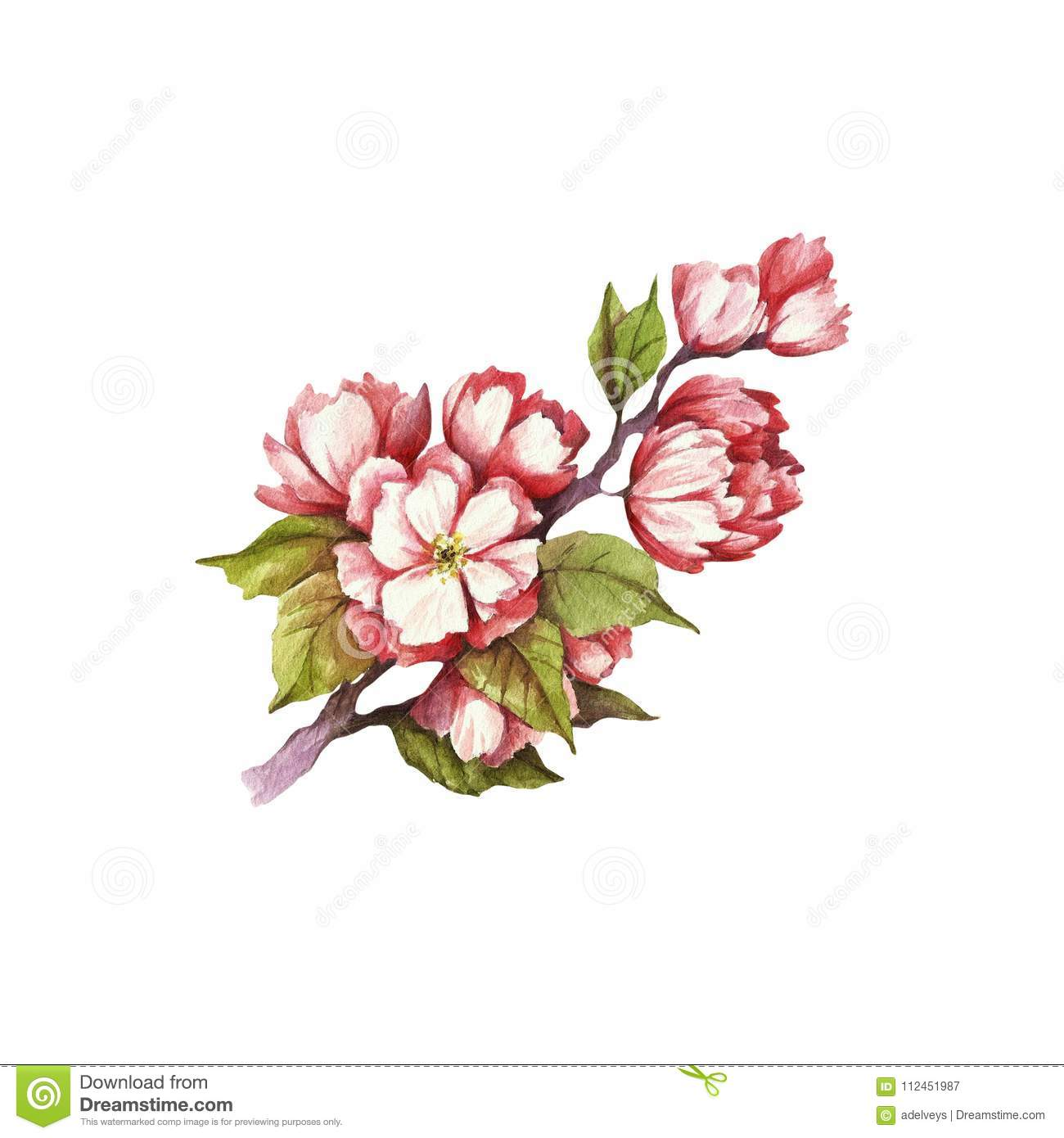 branch of cherry blossoms hand draw watercolor illustration stock