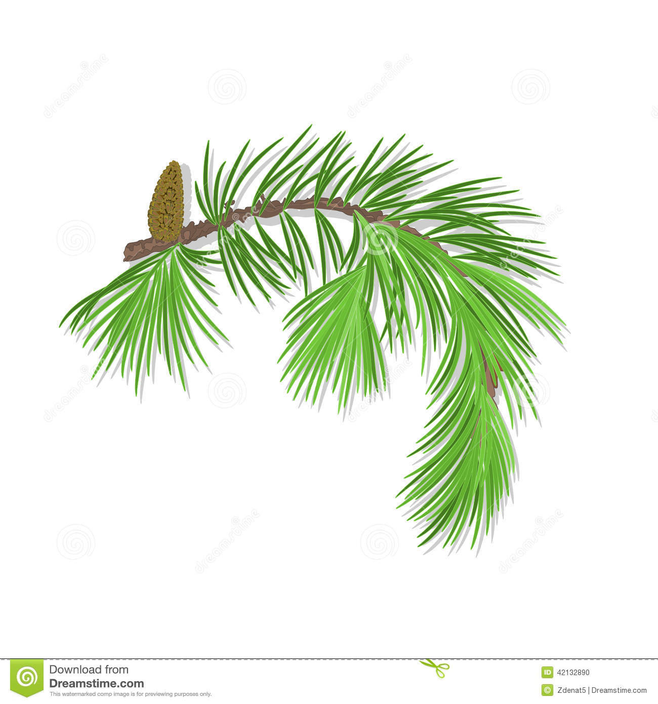 Branch Of Christmas Tree With Pine Cone Vector ...