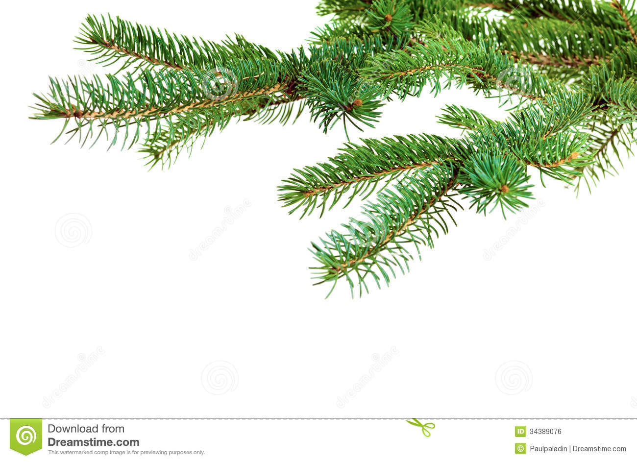 Branch Of Christmas Tree Royalty Free Stock Image Image