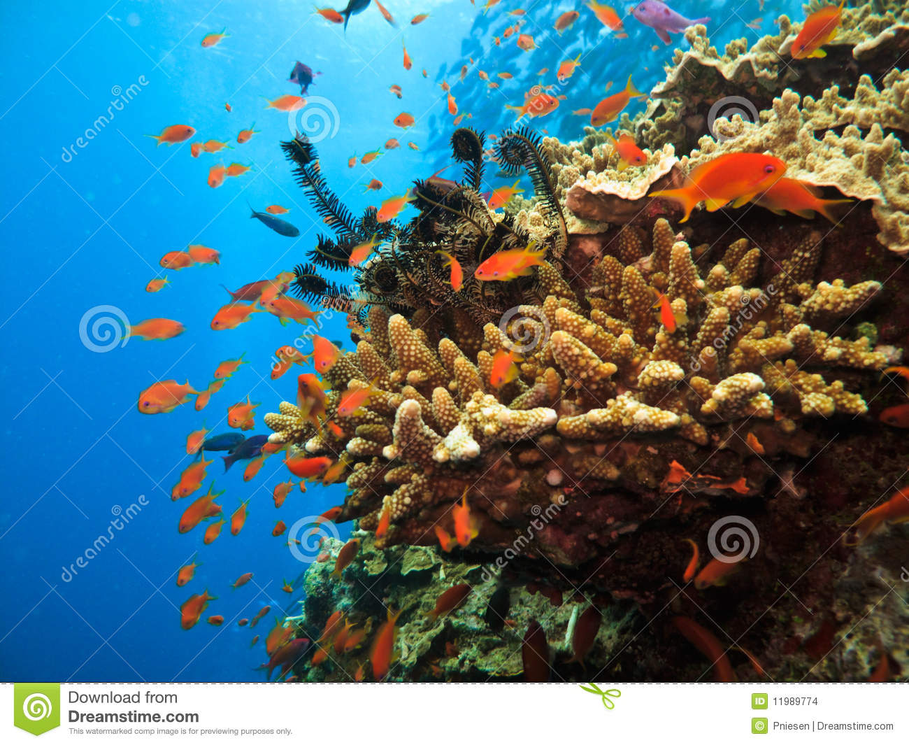 how to catch a clownfish