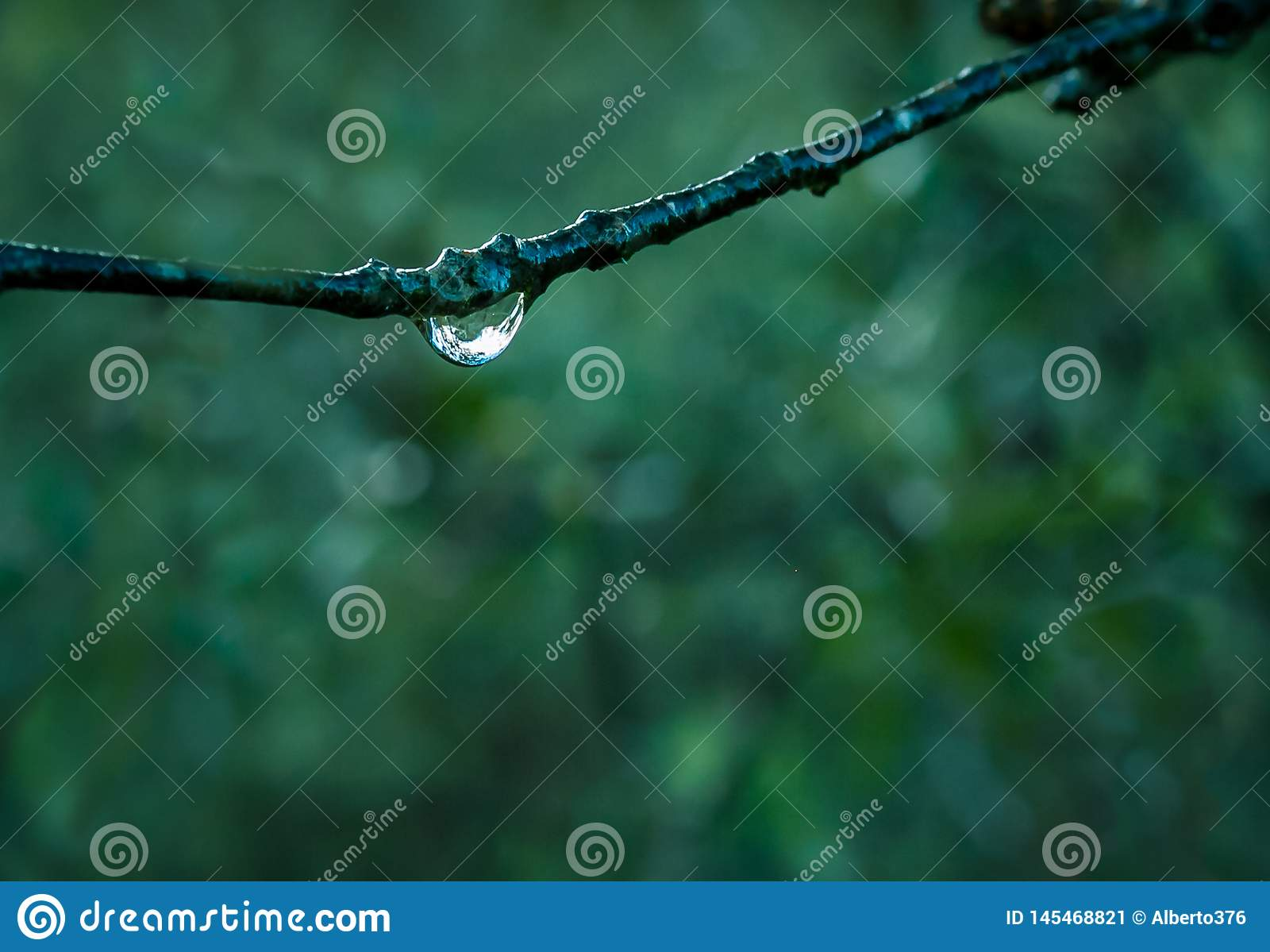 Branch with drops of dew