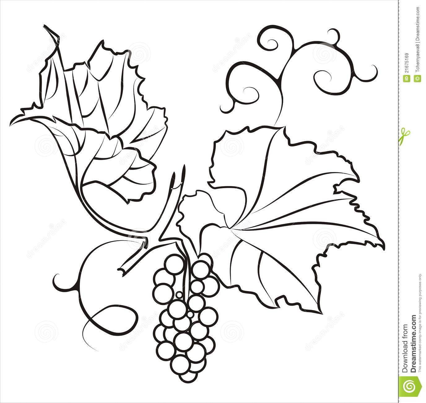 Line Drawing Grapes : A branch of grapes stock vector image graphic style