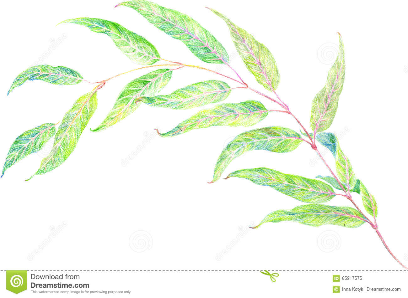 Branch With Leaves - Drawing With Colored Pencils. Stock ...