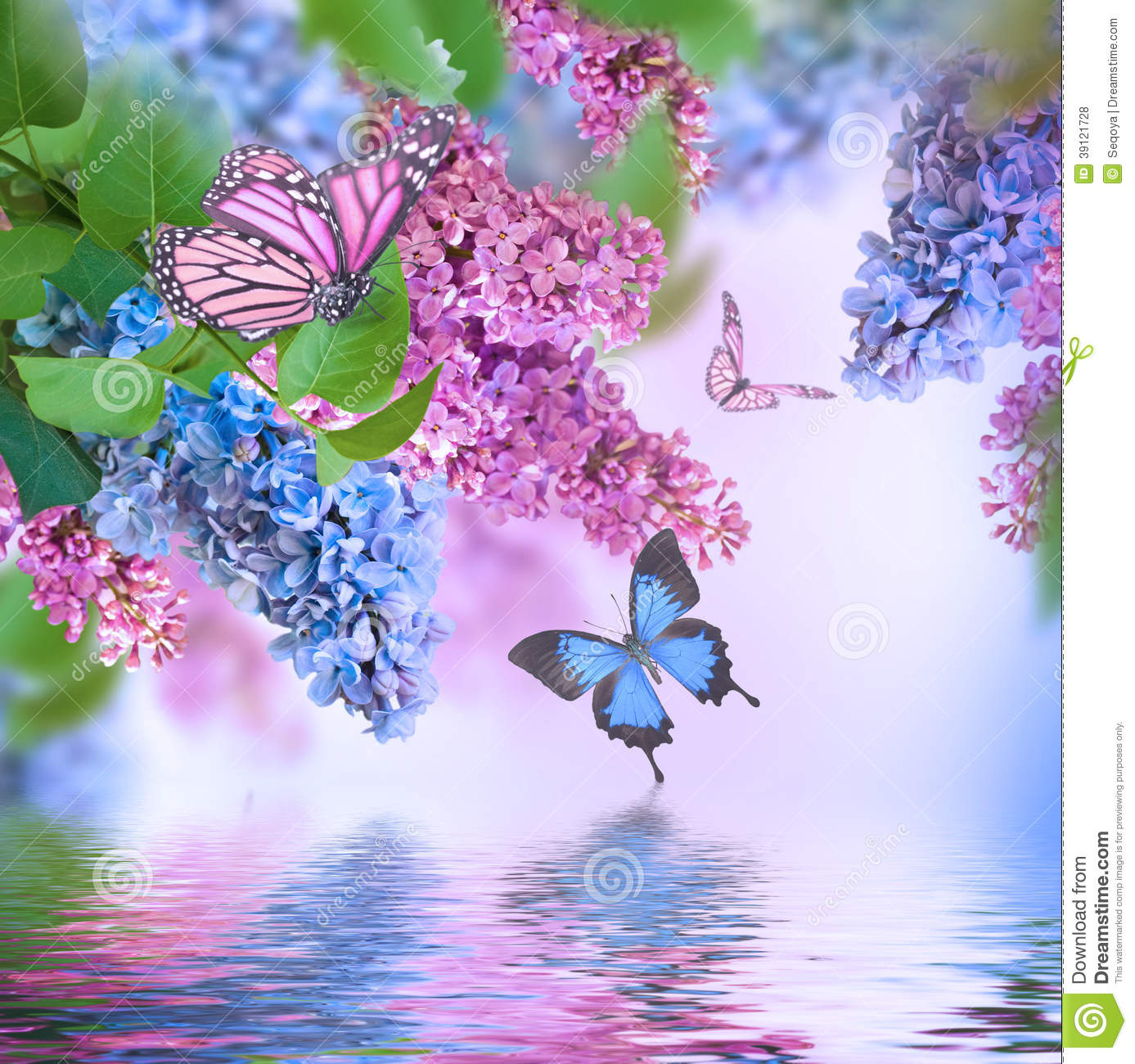 Branch Of Lilac Blue And Pink Butterfly Stock Photo