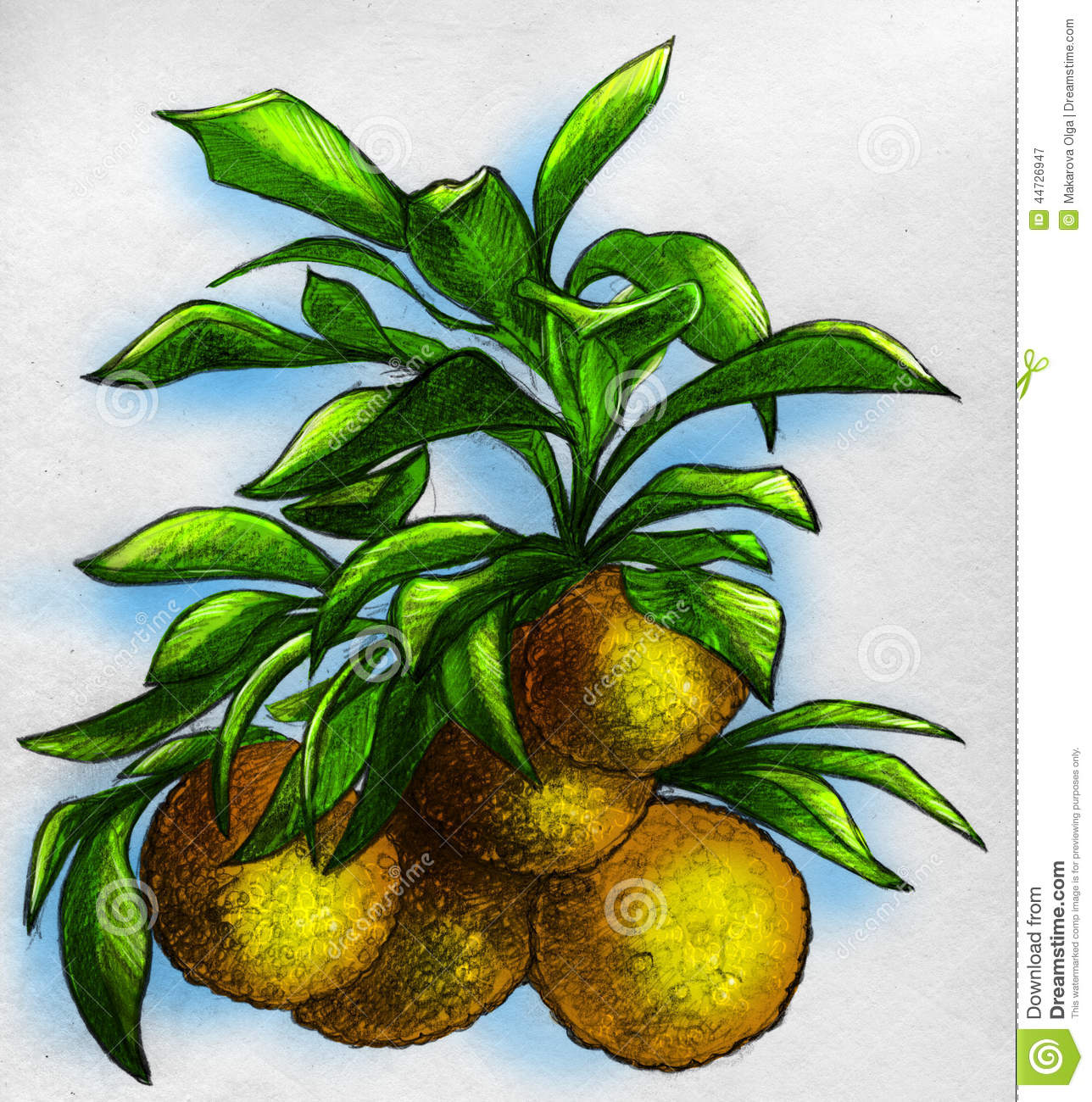Branch Of An Orange Tree With Fruits Stock Illustration ...