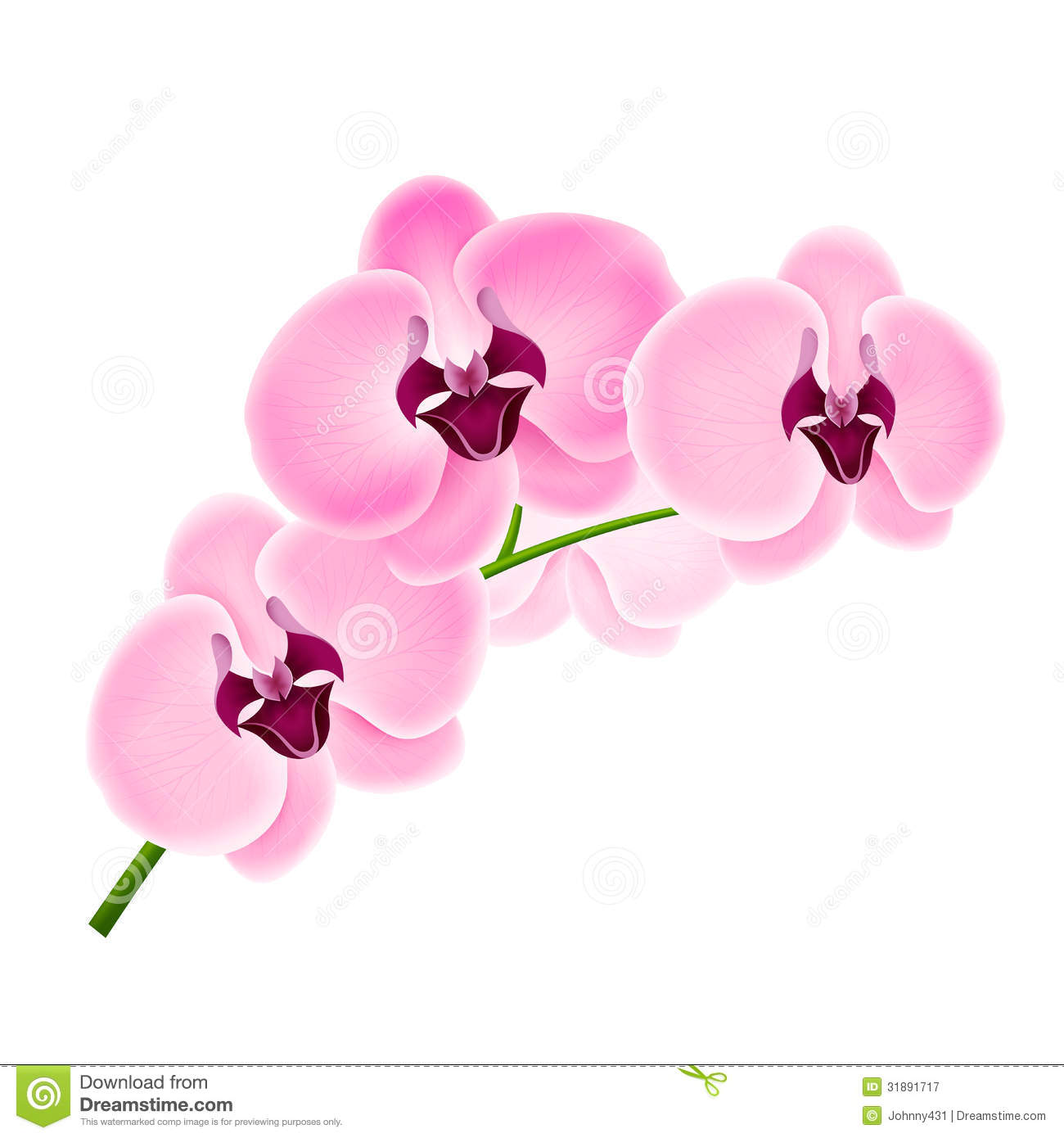 Branch Orchids Royalty Free Stock Photography Image 31891717