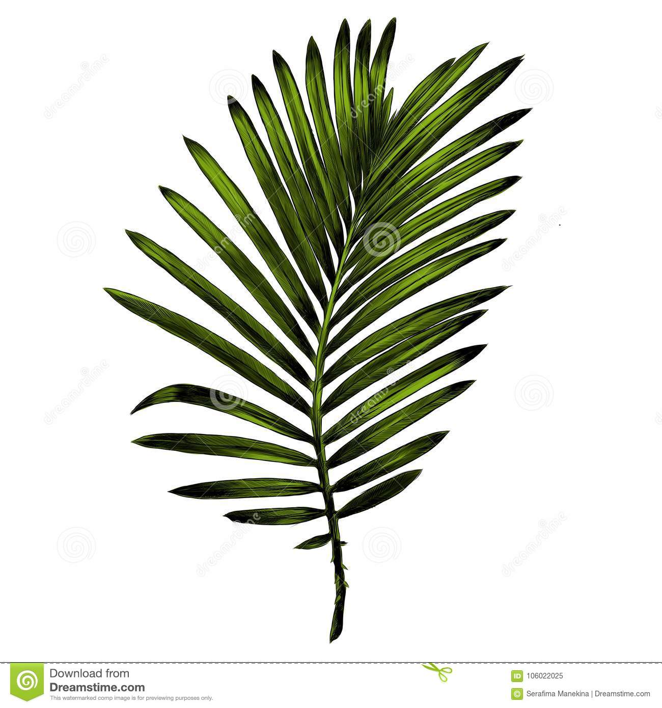 Branch Of A Palm Tree Sketch Vector Graphics Stock Vector ...