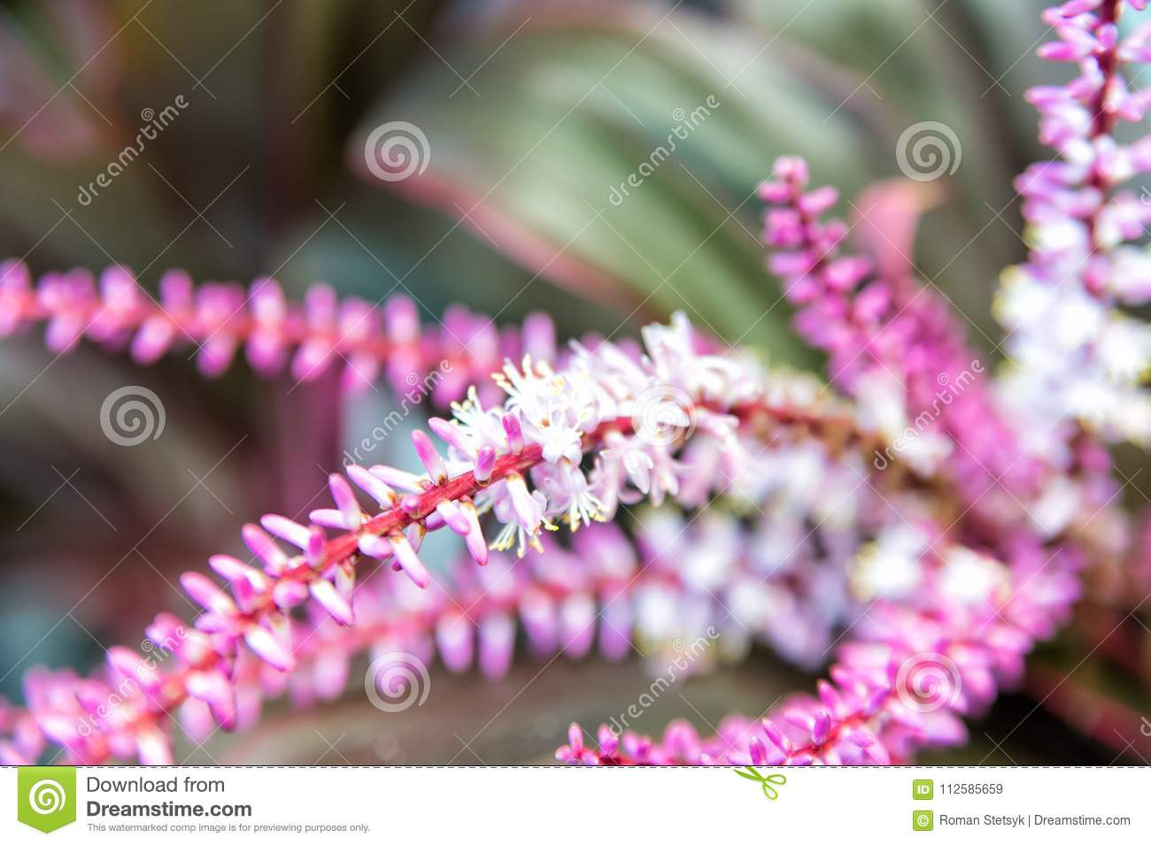 Branch with pink blossom spring flowers bloom on natural branch with pink blossom spring flowers bloom on natural background blossom bloom flowering spring springtime summer nature plant environment mightylinksfo
