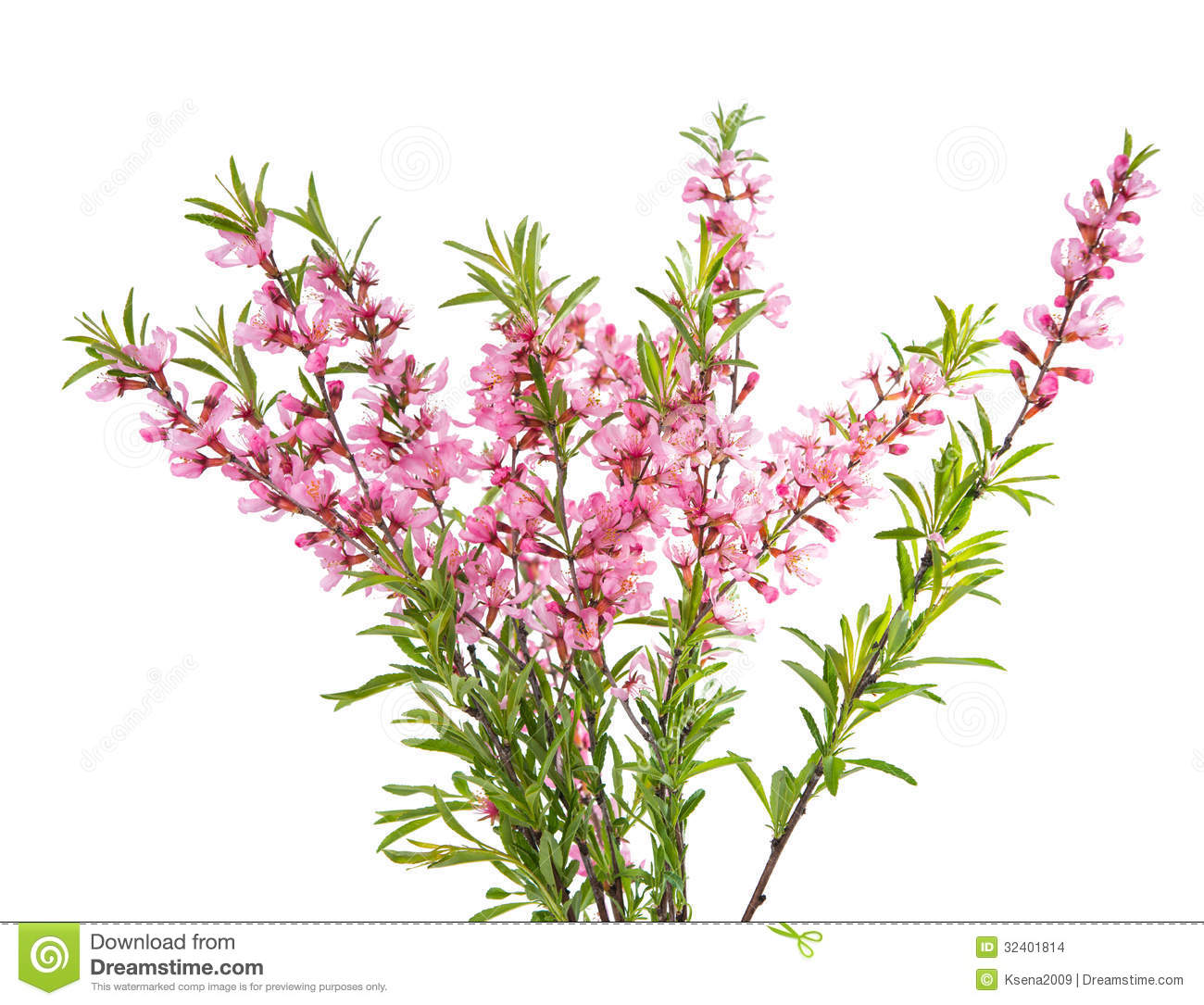 Branch With Pink Flowers Stock Photo Image Of Detail 32401814