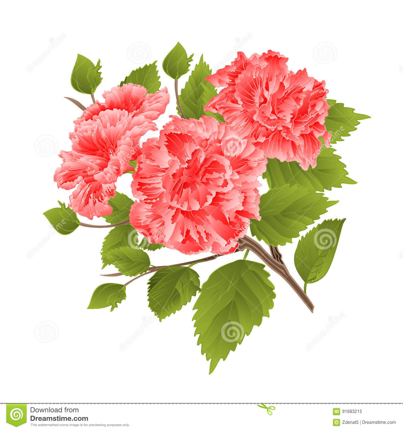 Branch Pink Hibiscus Tropical Flowers On A White Background Vintage
