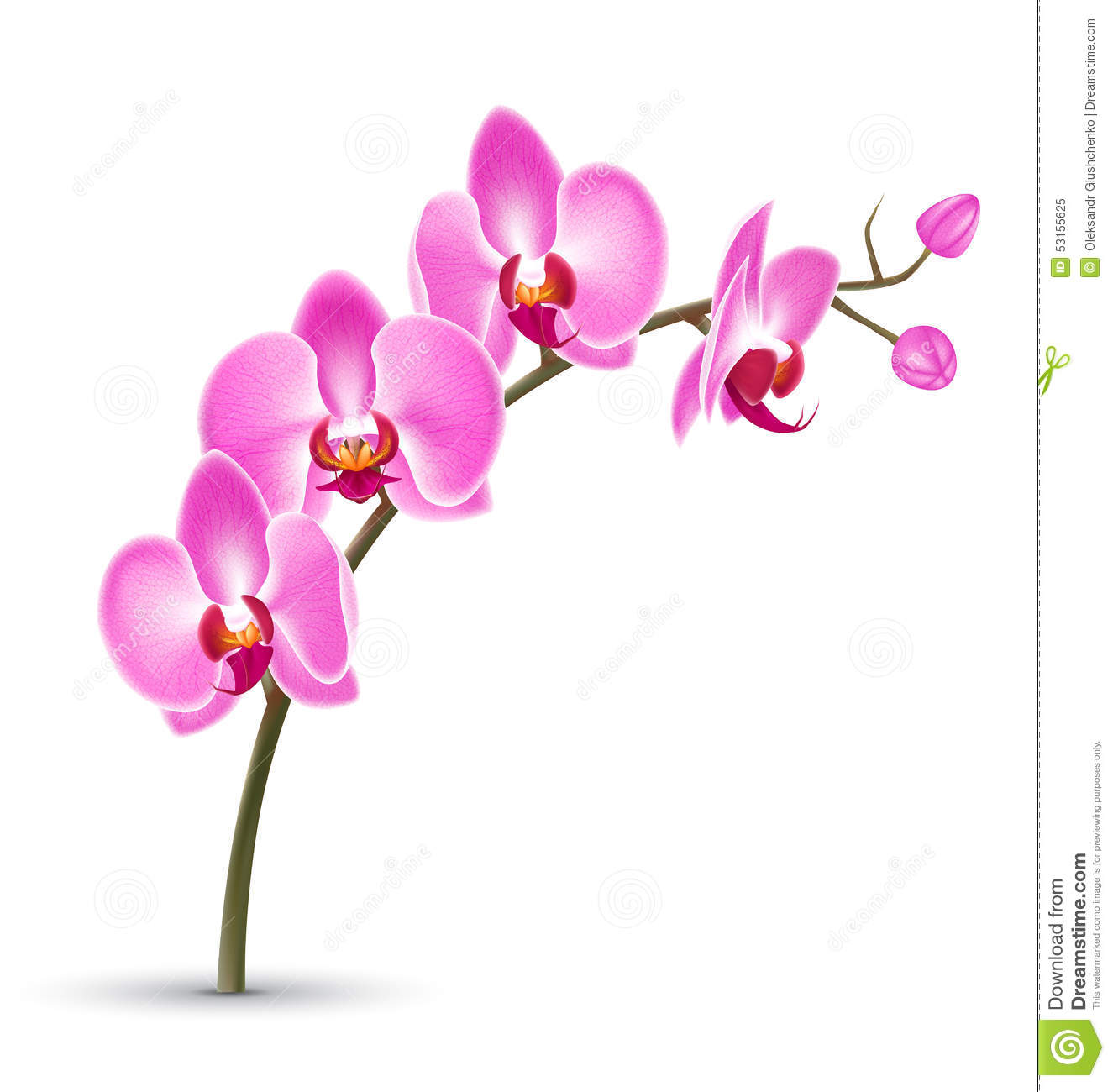 branch of pink orchid isolated on white stock vector illustration of bloom elegant 53155625. Black Bedroom Furniture Sets. Home Design Ideas