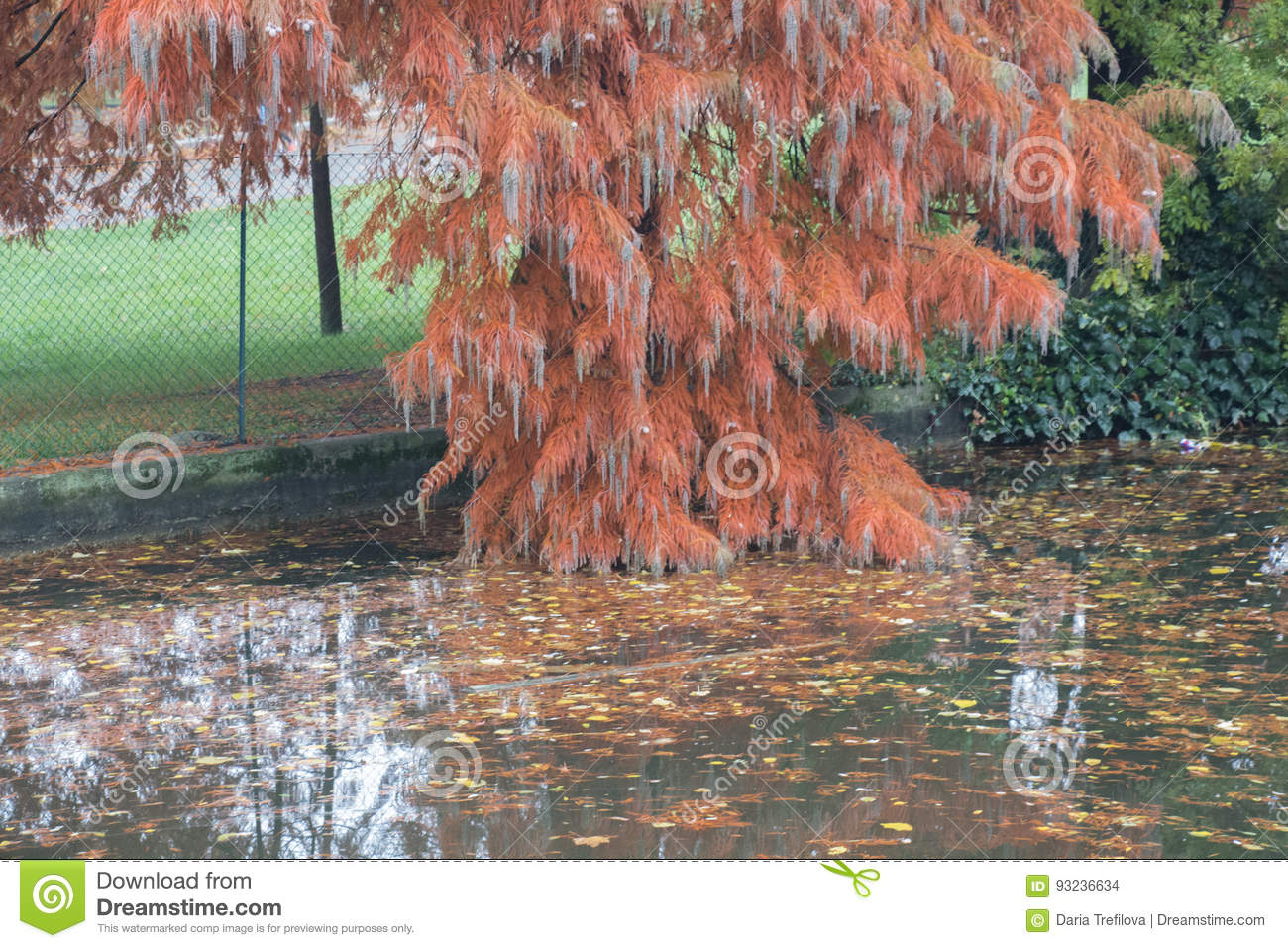 A branch of red tree in giardini margherita park. bologna emilia
