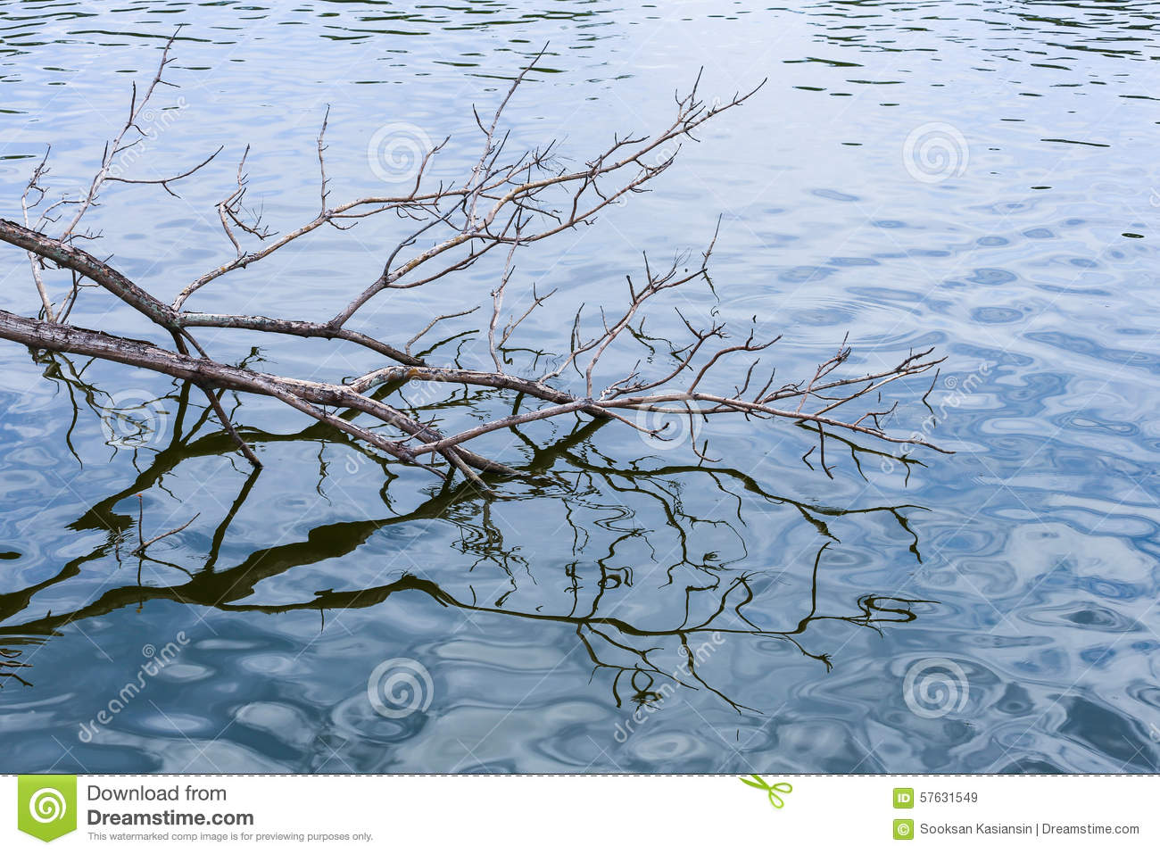 Branch touch the water stock image. Image of water ...