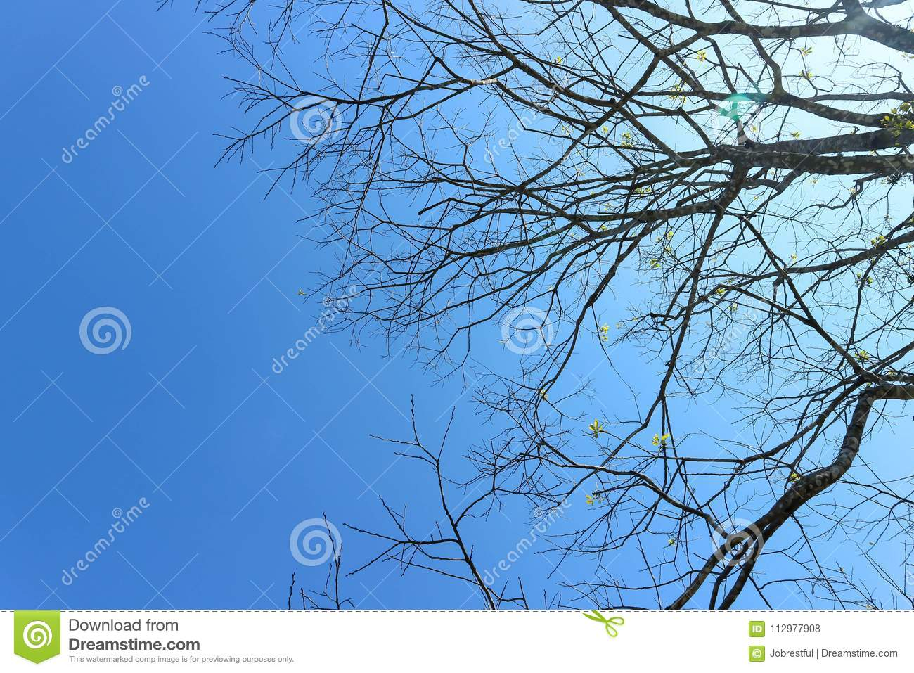 Branch or tree and blue sky