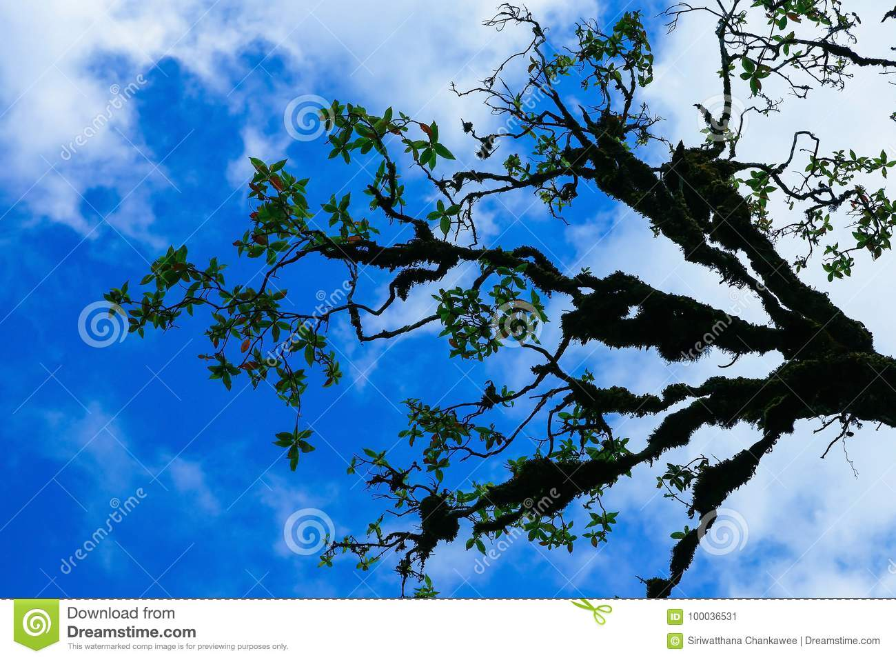 Branch of Tree coverd with moss with blue sky