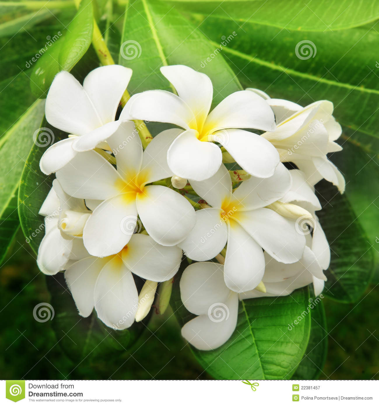 Branch of tropical flowers