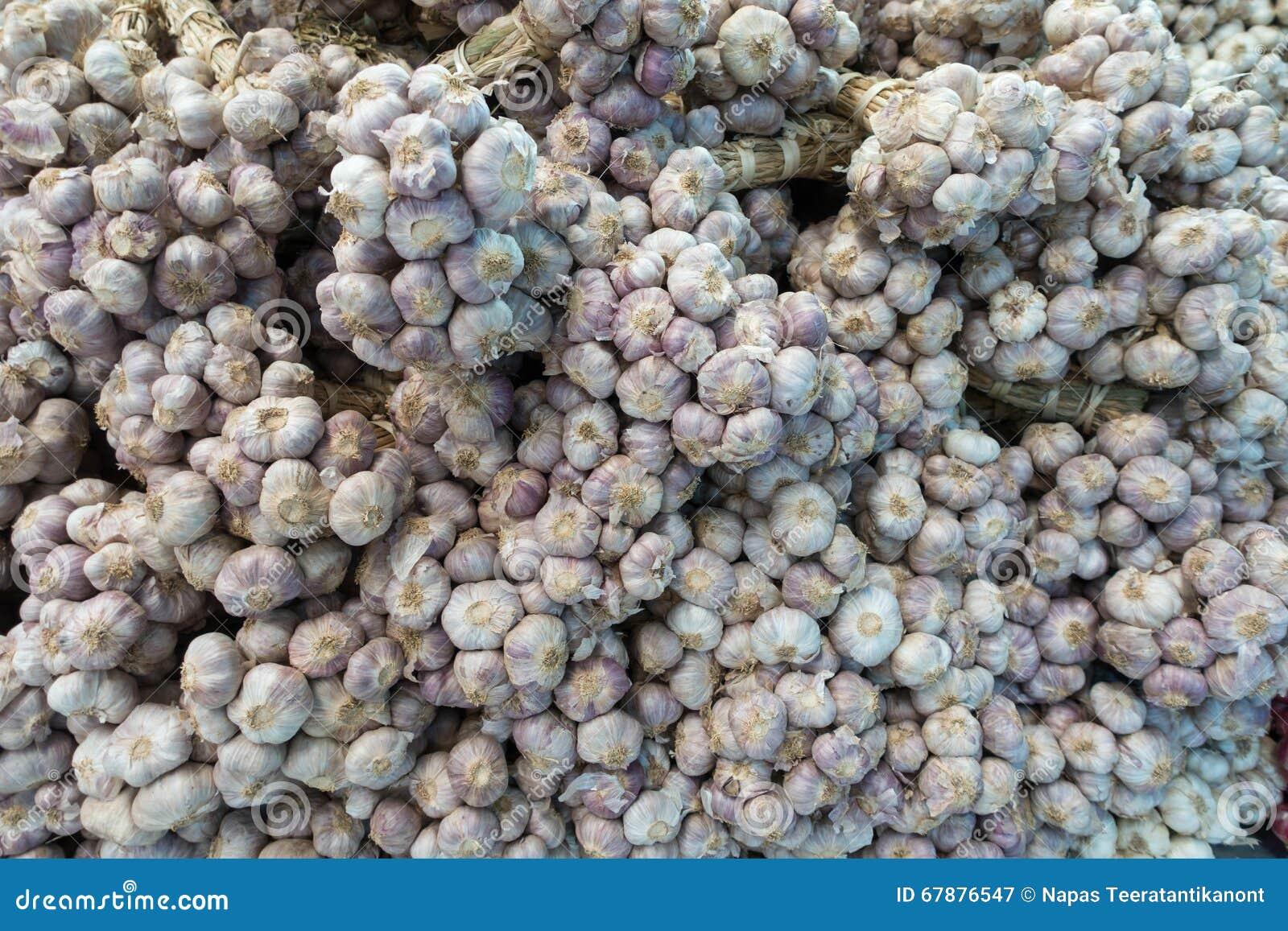Branche d ail frais