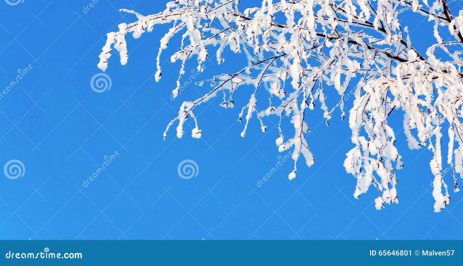 Branche d arbre avec la neige blanche et la gelée brillante