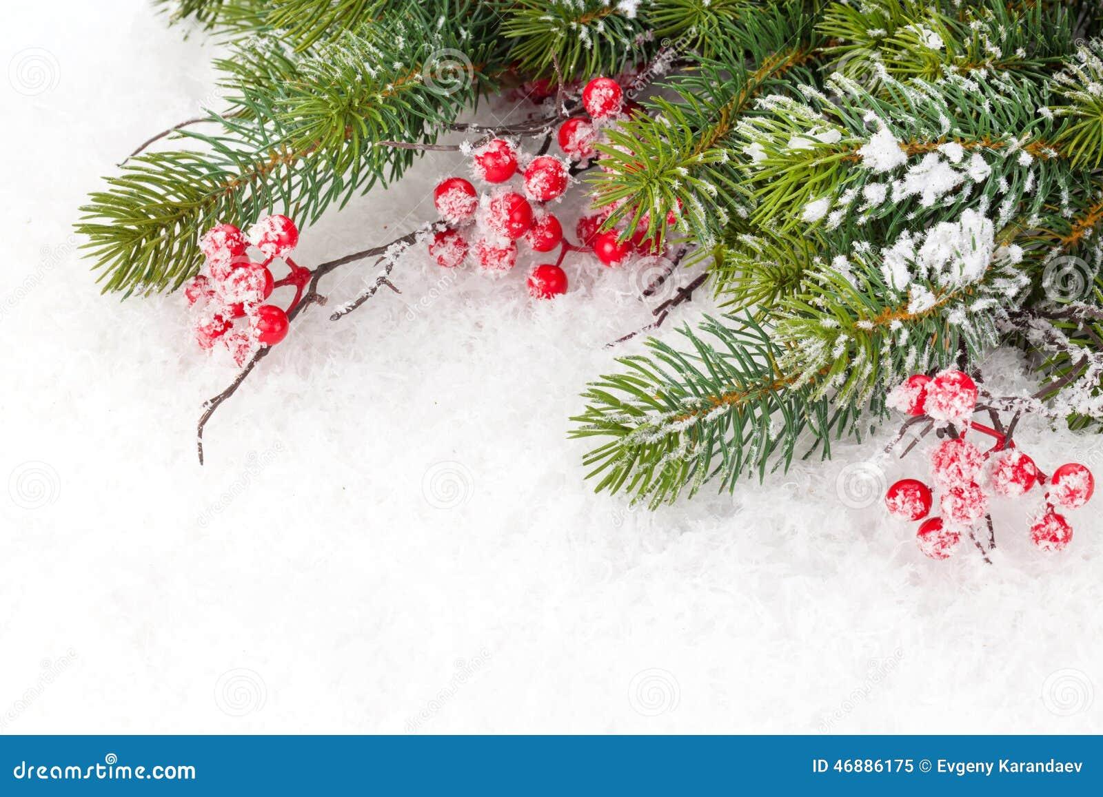 branche d 39 arbre de sapin de no l avec la baie de houx image stock image 46886175. Black Bedroom Furniture Sets. Home Design Ideas