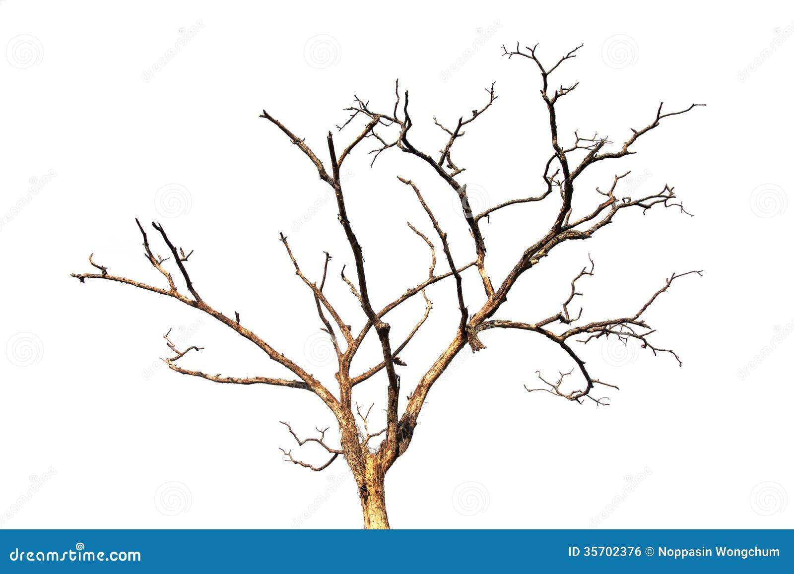 branche d 39 arbre morte d 39 isolement image libre de droits image 35702376. Black Bedroom Furniture Sets. Home Design Ideas