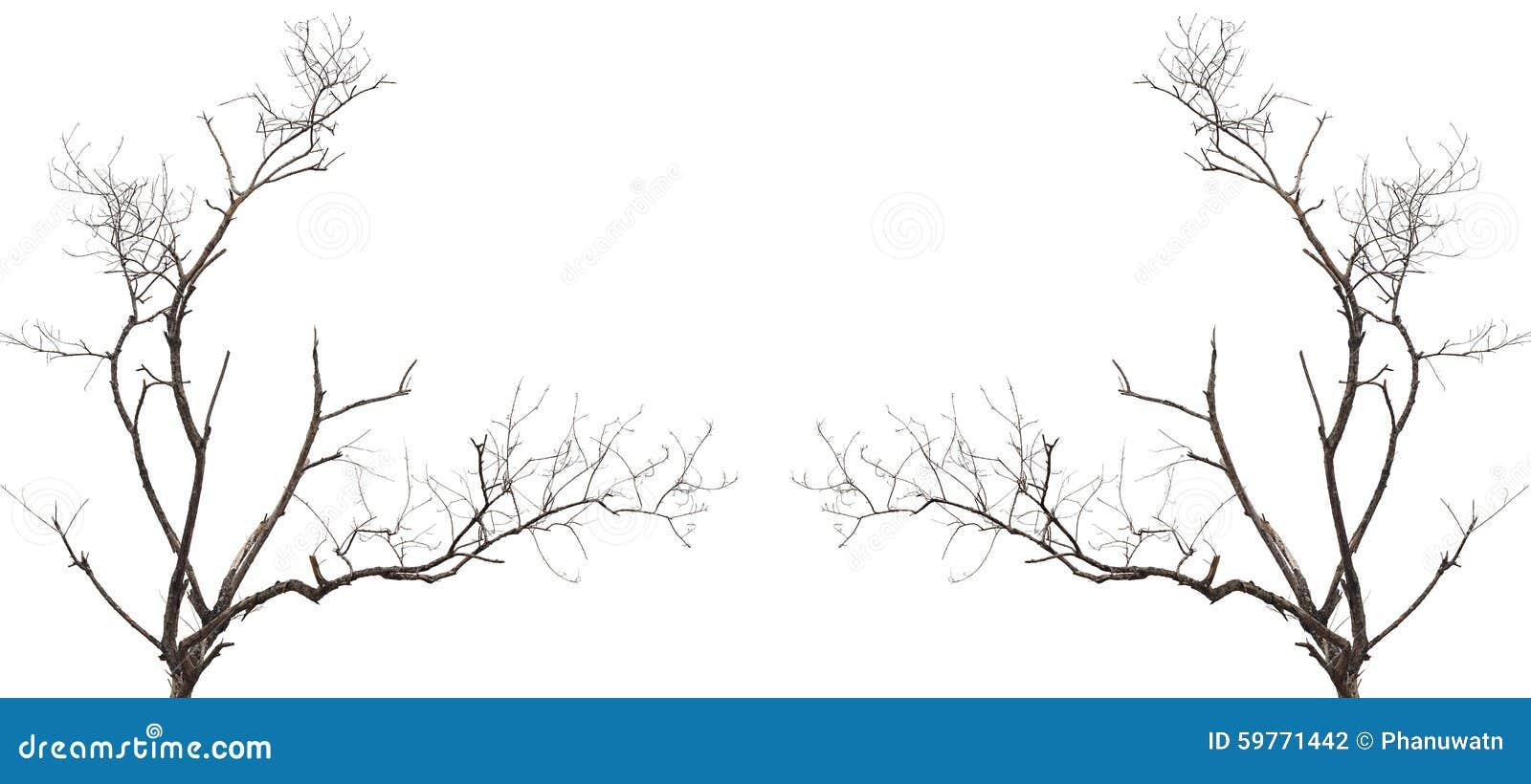 branche d 39 arbre sans feuille d 39 isolement sur le blanc photo stock image 59771442. Black Bedroom Furniture Sets. Home Design Ideas