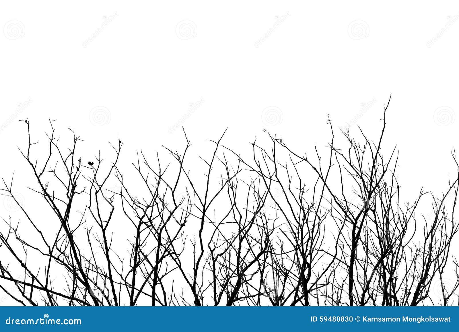 Branche d 39 arbre sans feuilles fond noir et blanc de ton - Arbres sans feuilles ...