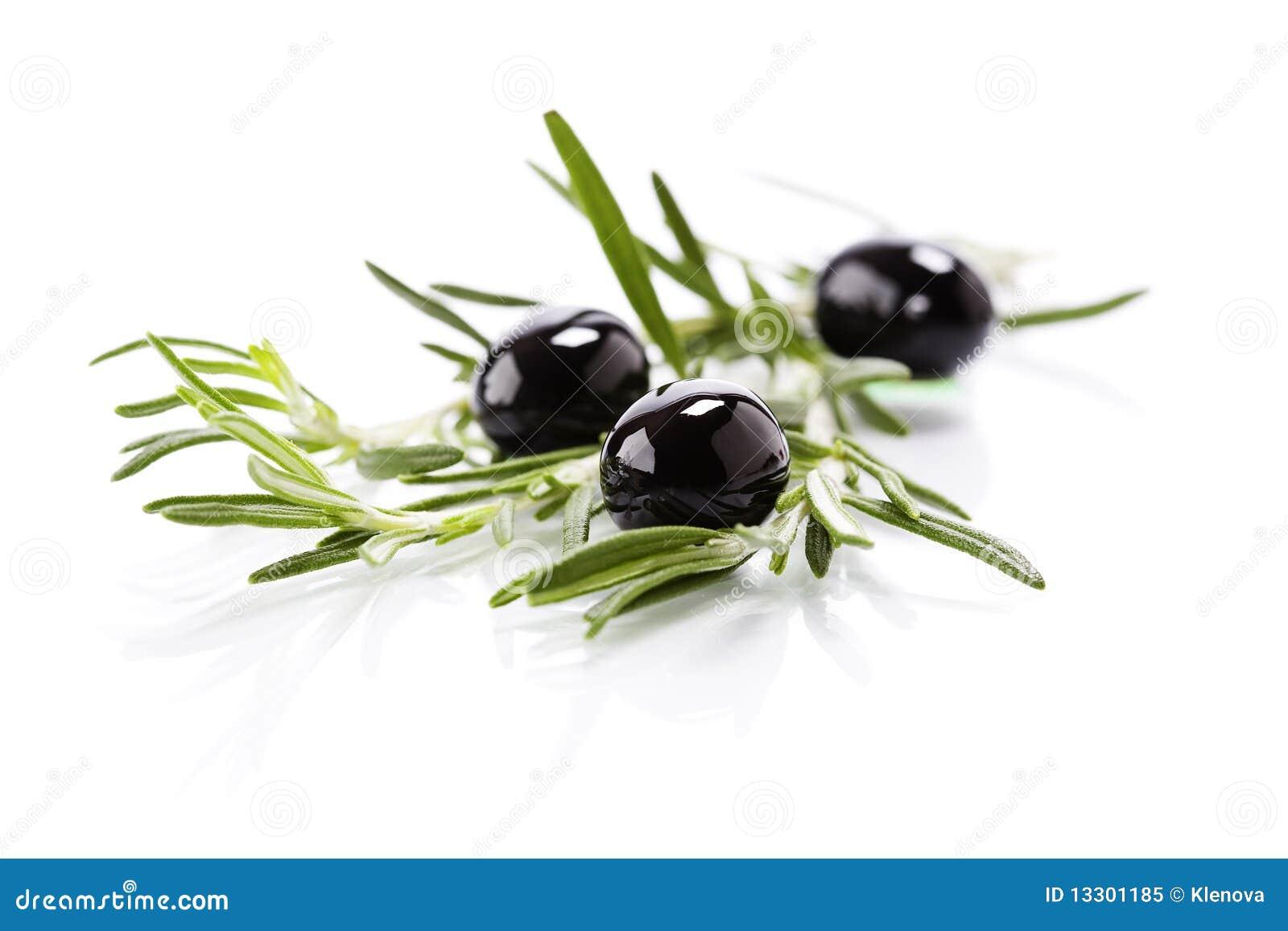 Branche d olivier