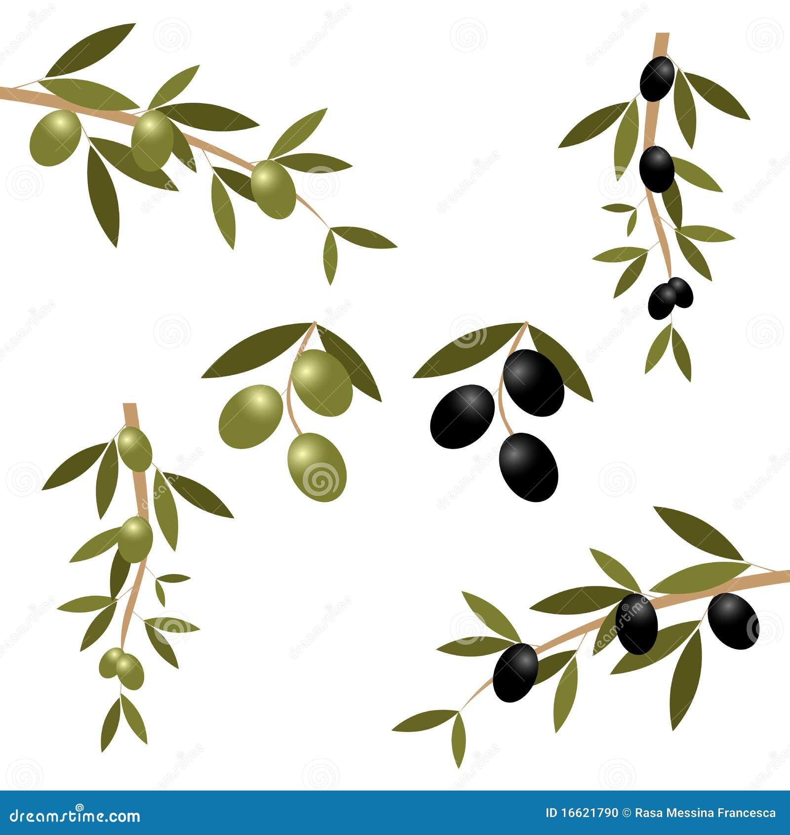 branche d 39 olivier illustration de vecteur image du vert 16621790. Black Bedroom Furniture Sets. Home Design Ideas
