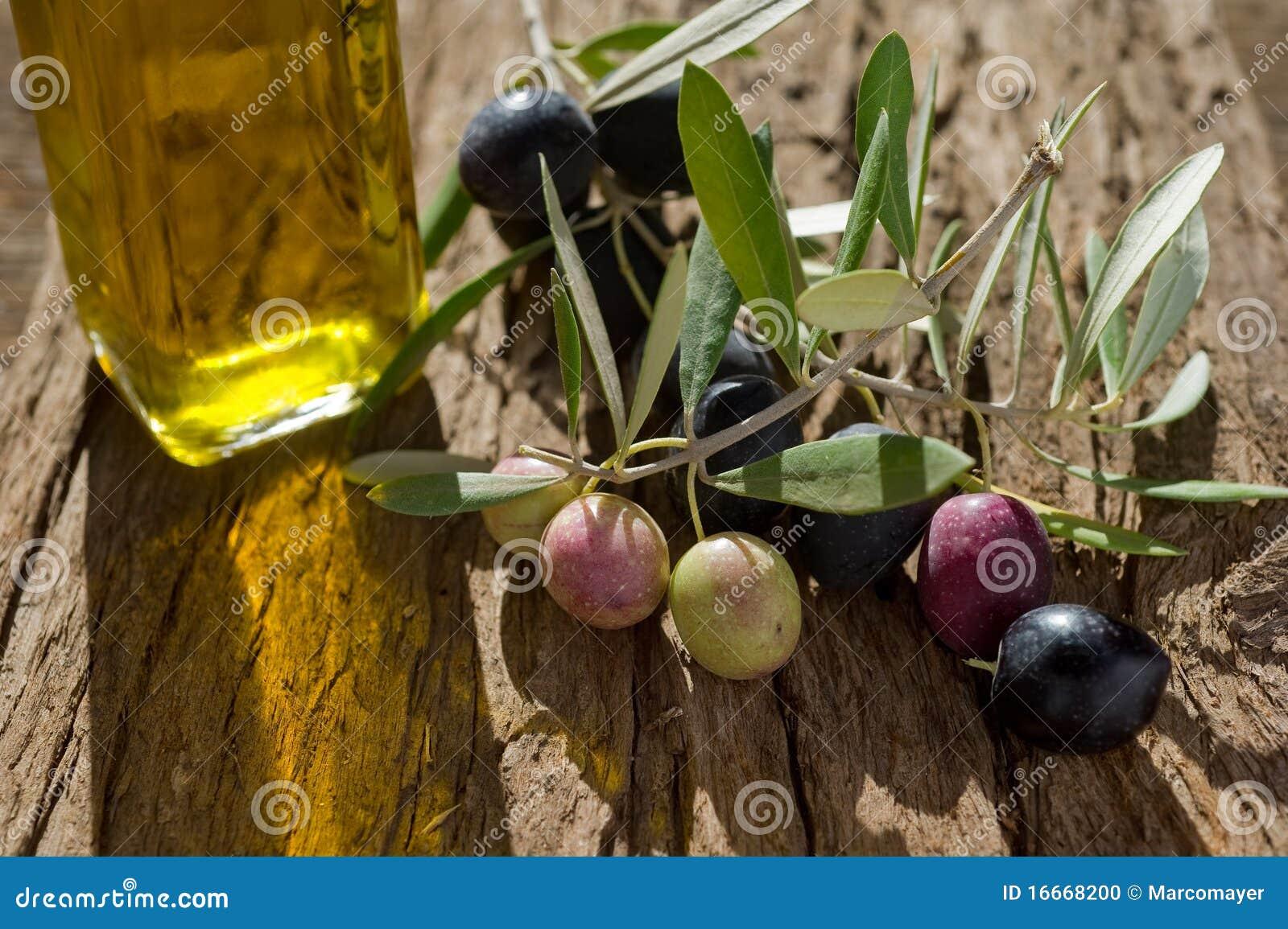 Branche d olivier avec le pétrole