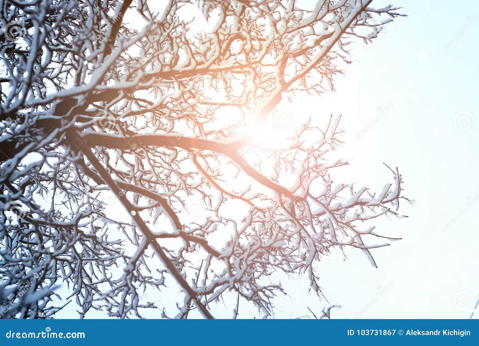 Branche de ciel d arbre pendant l hiver de forêt