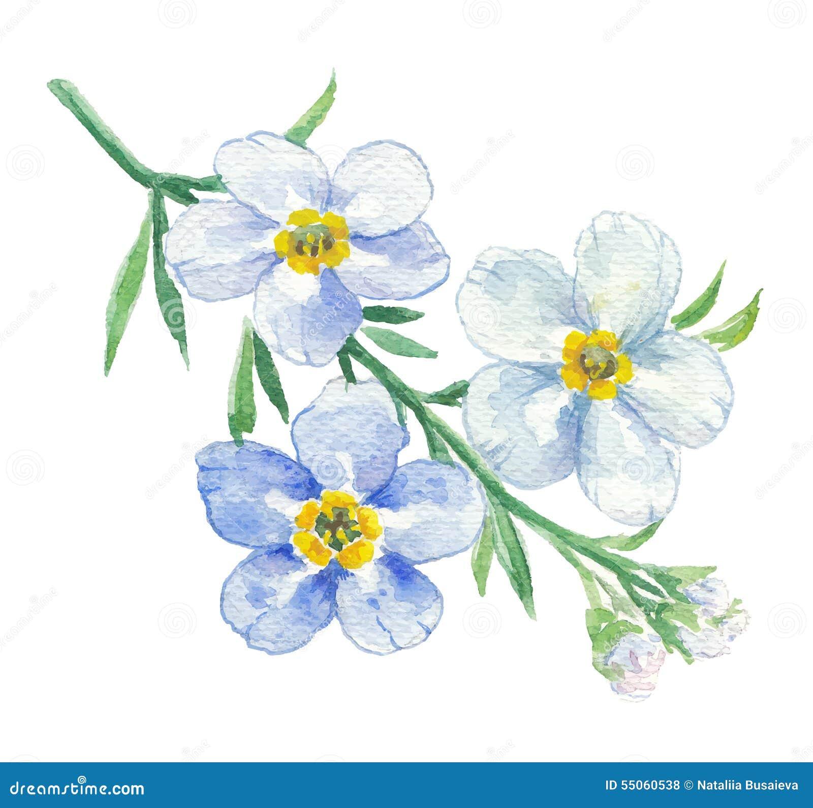 Branche De Myosotis Bleu Illustration De Vecteur Illustration Du Mod 232 Le 55060538