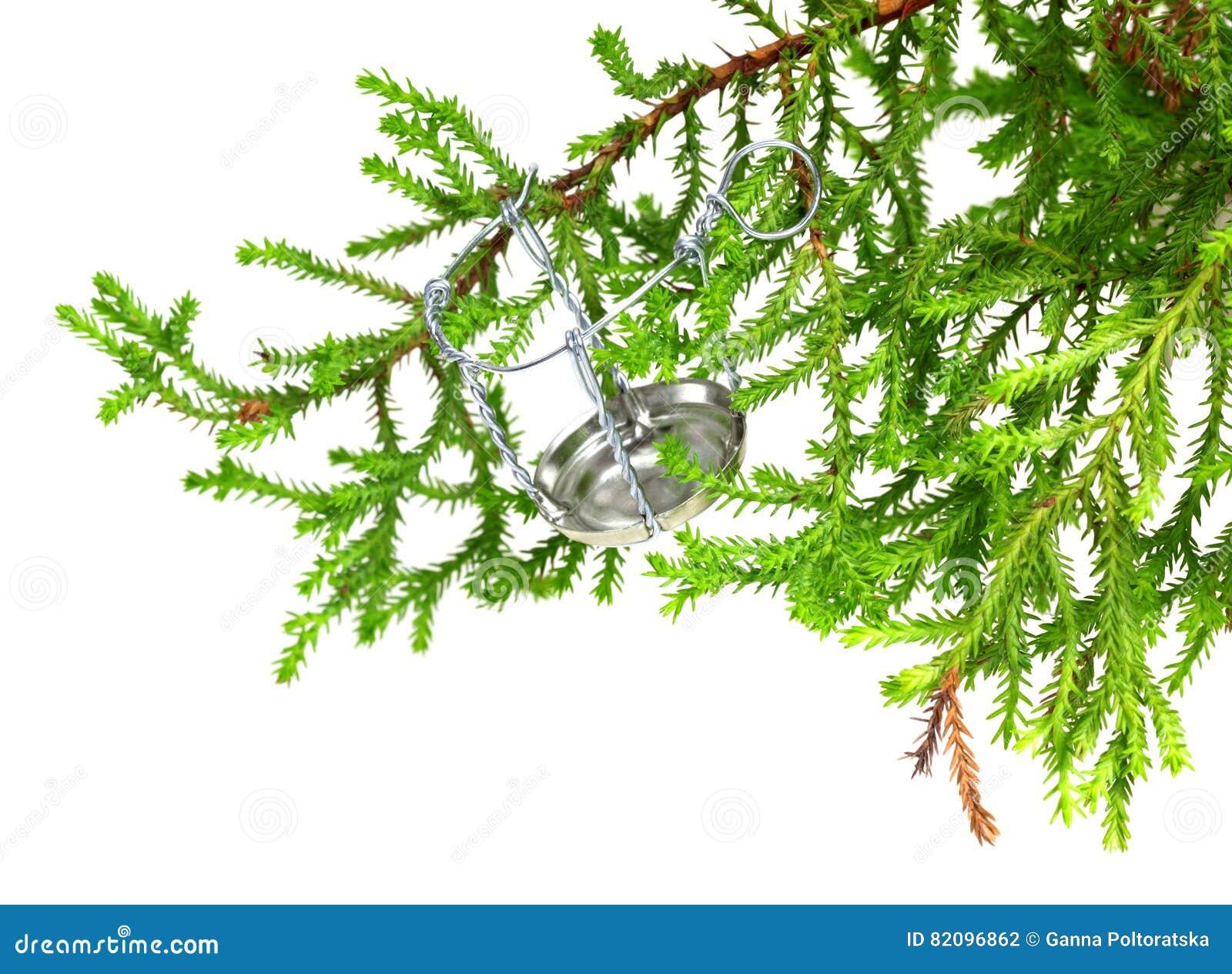 catch elegant shoes amazon Branche De Noël-arbre à La Maison Décoratif Avec Le Muselet ...