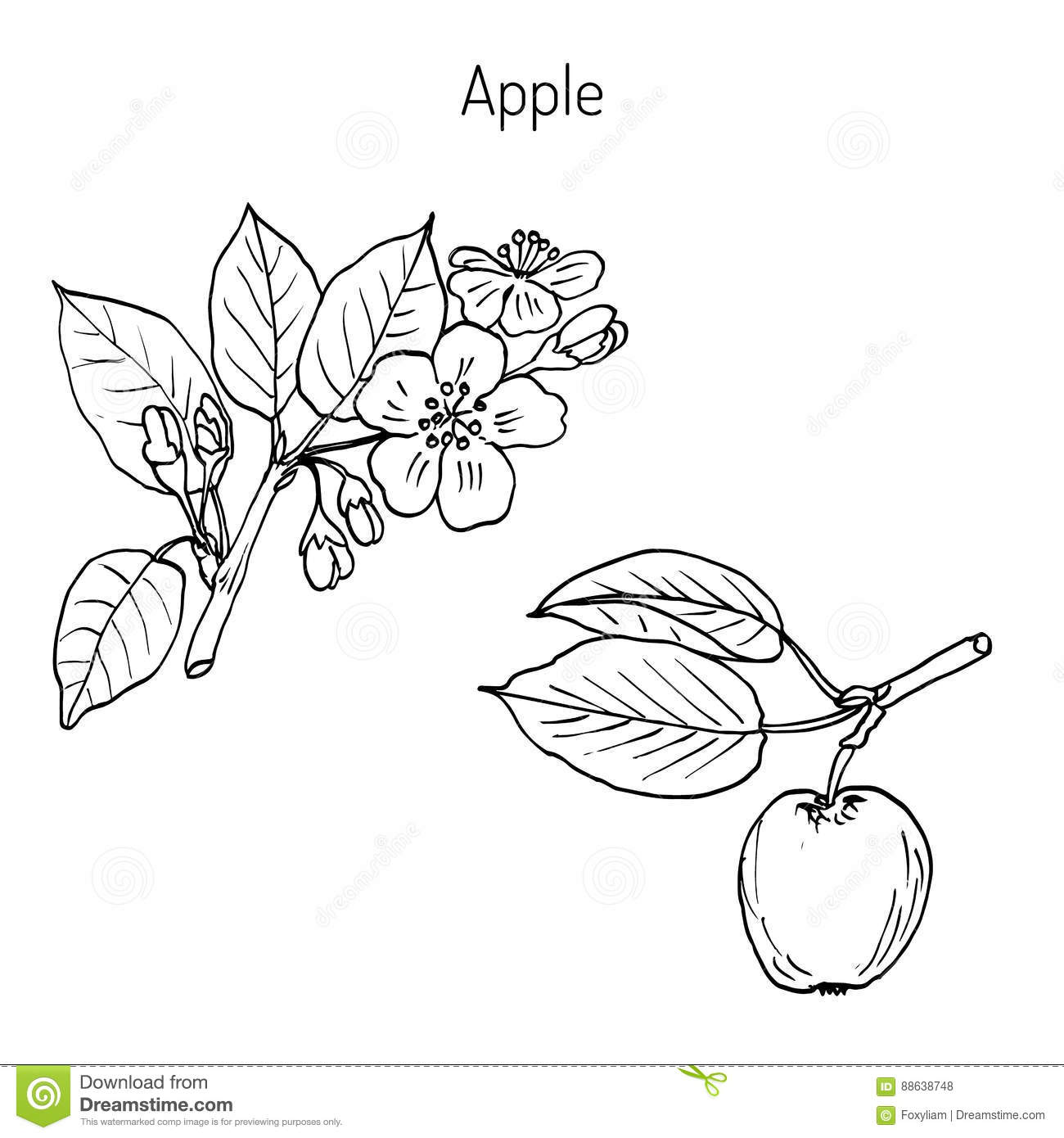 Branche de pommier de dessin de main illustration de - Dessin pomme apple ...