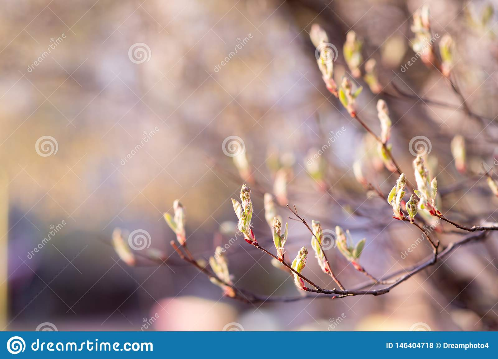 Branche de ressort avec de jeunes feuilles