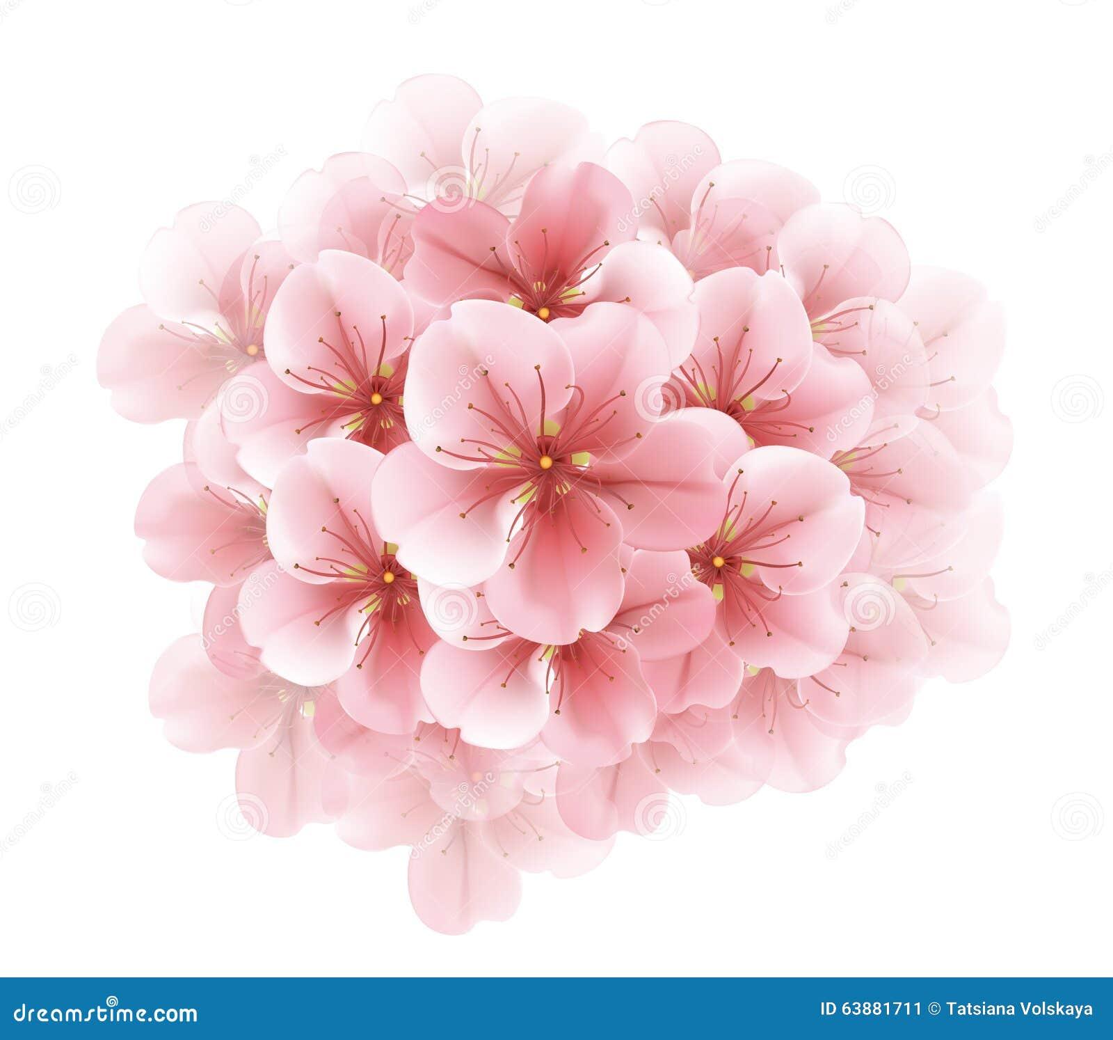 Branche De Sakura De Floraison Blanc Cerisier Japonais Belle Fleur