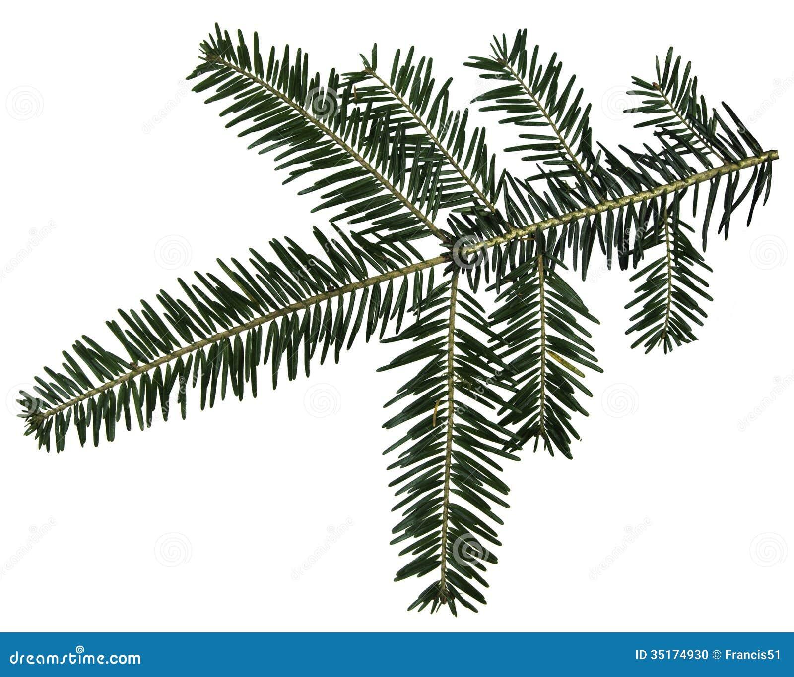 Branche de sapin photo stock image 35174930 - Guirlande branche de sapin ...