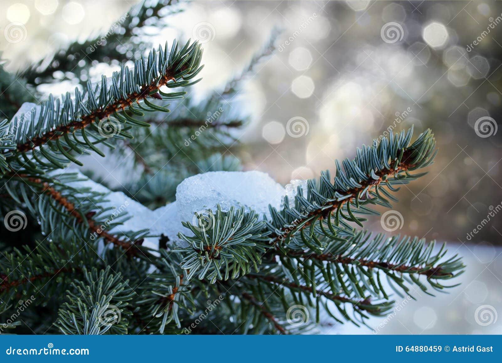 branche de sapin avec le scintillement et la neige photo stock image 64880459. Black Bedroom Furniture Sets. Home Design Ideas