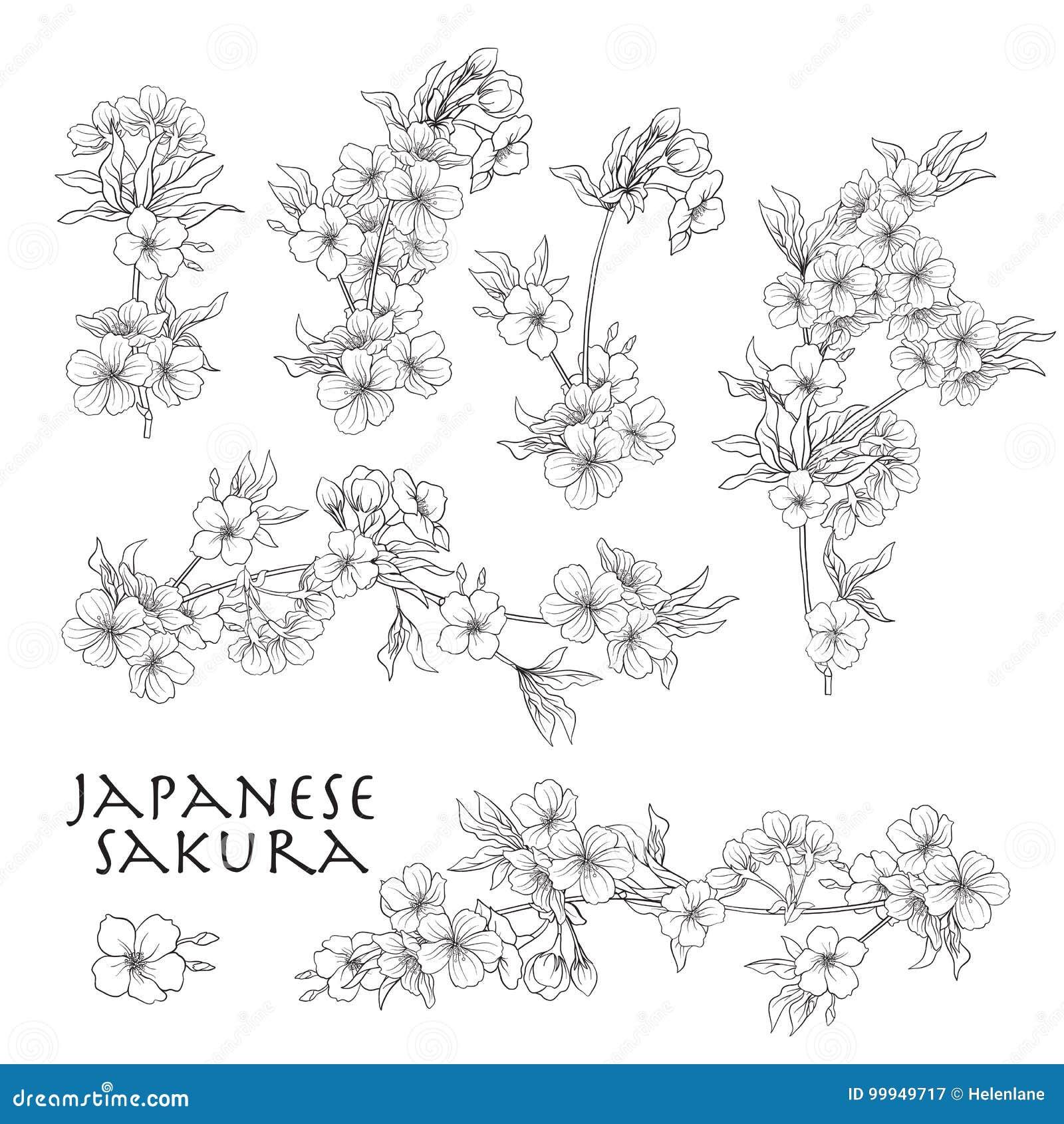 Branche Des Fleurs De Cerisier Cerise Japonaise Ligne Courante Vecteur Il Illustration De Vecteur Illustration Du Fondamental Circuit 99949717