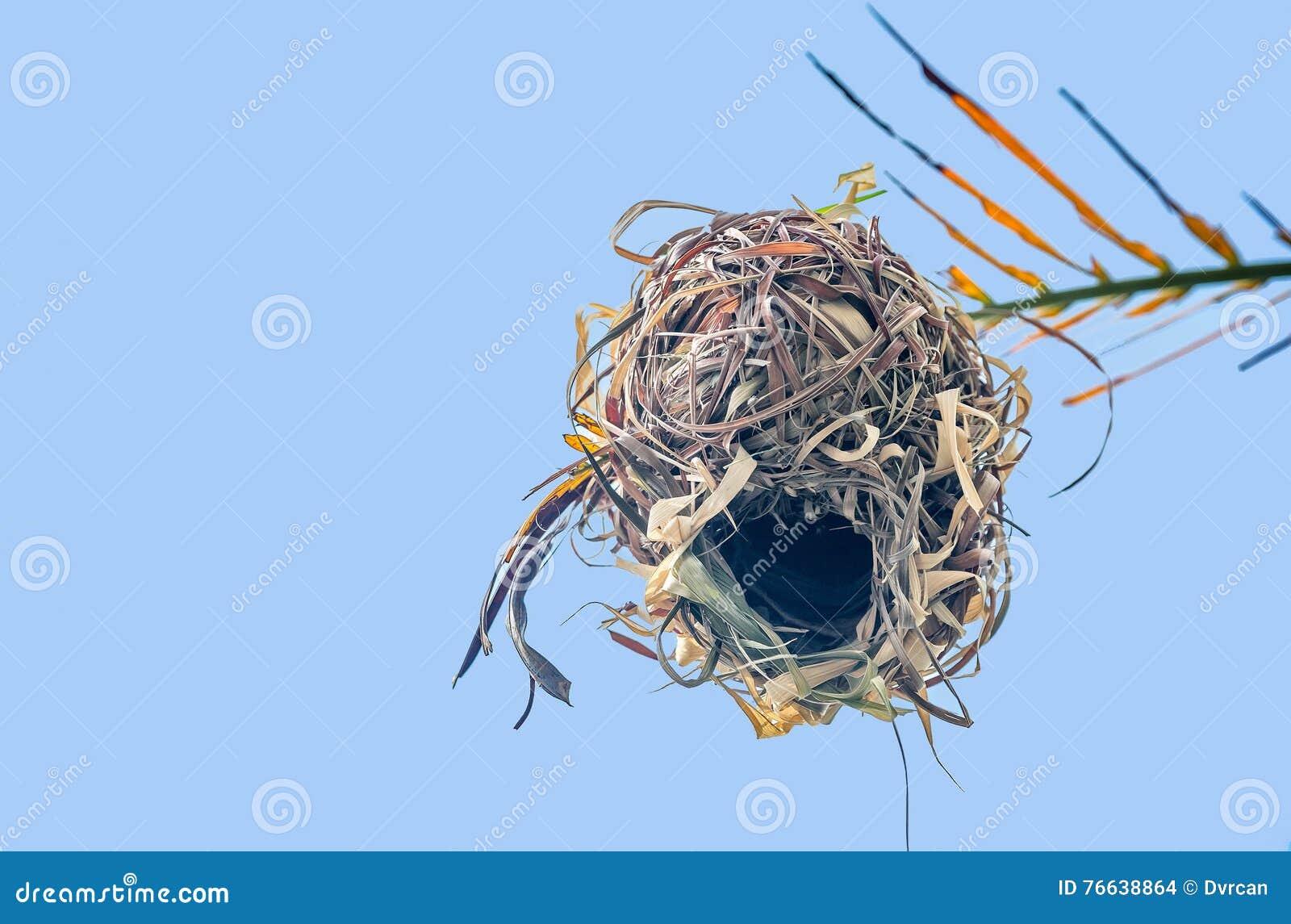 Hook up nid
