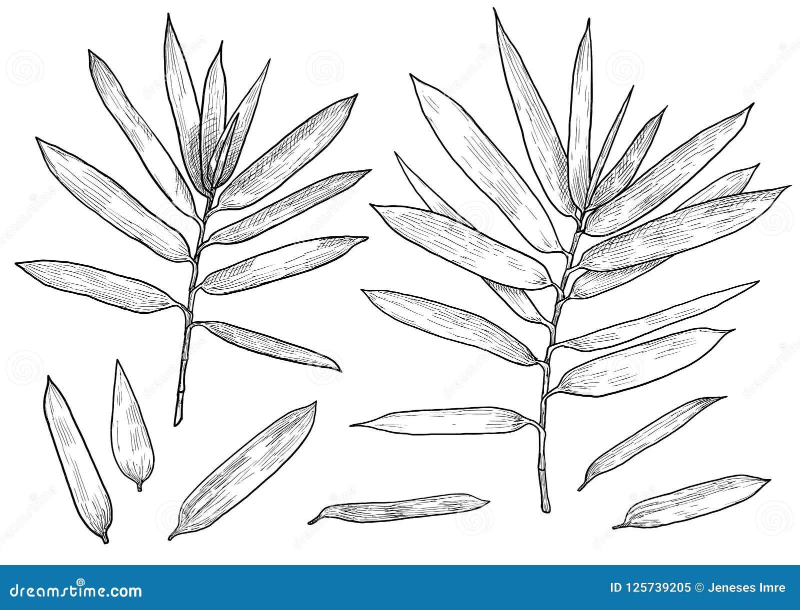 Branche En Bambou Illustration De Feuille Dessin Gravure