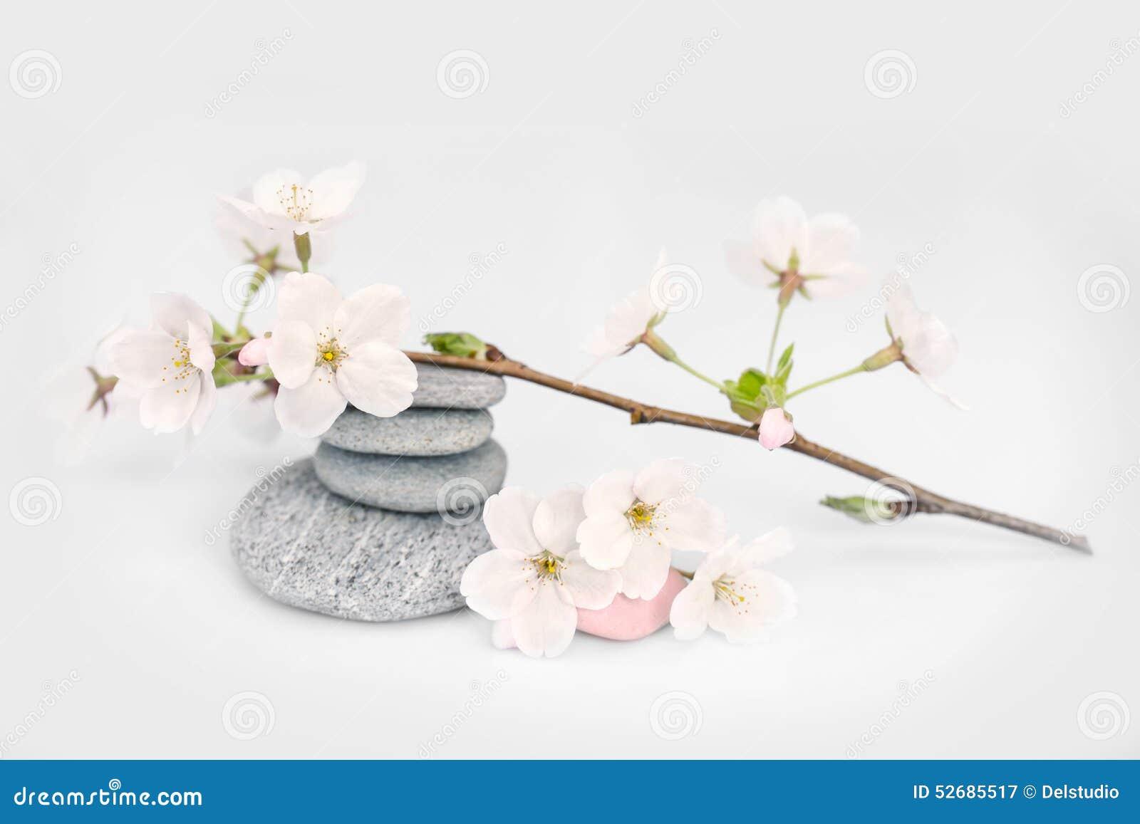 Branche et cailloux de fleur de cerisier image stock for Photo ecran zen